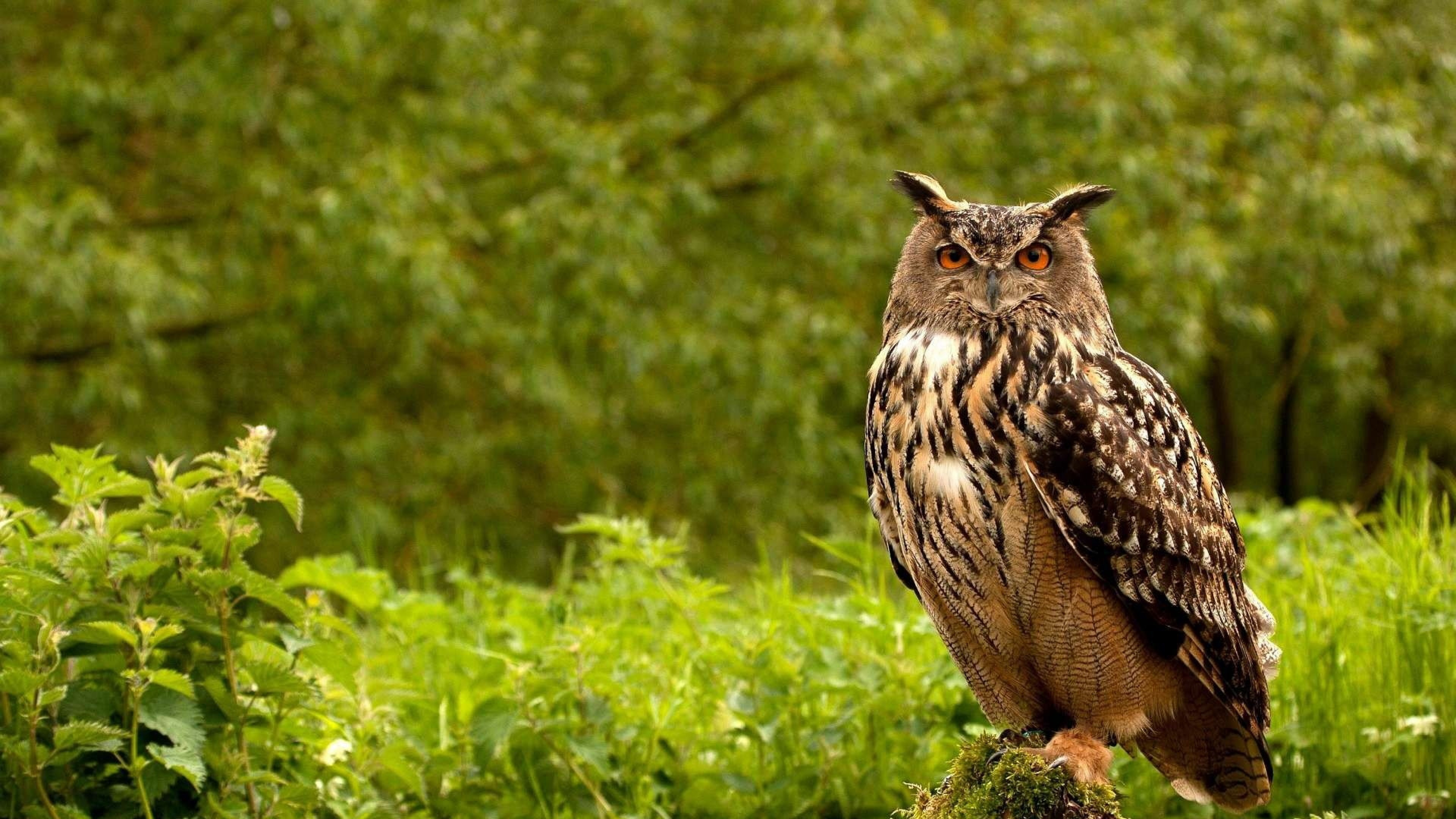 … 4k owls wallpapers high quality download free …