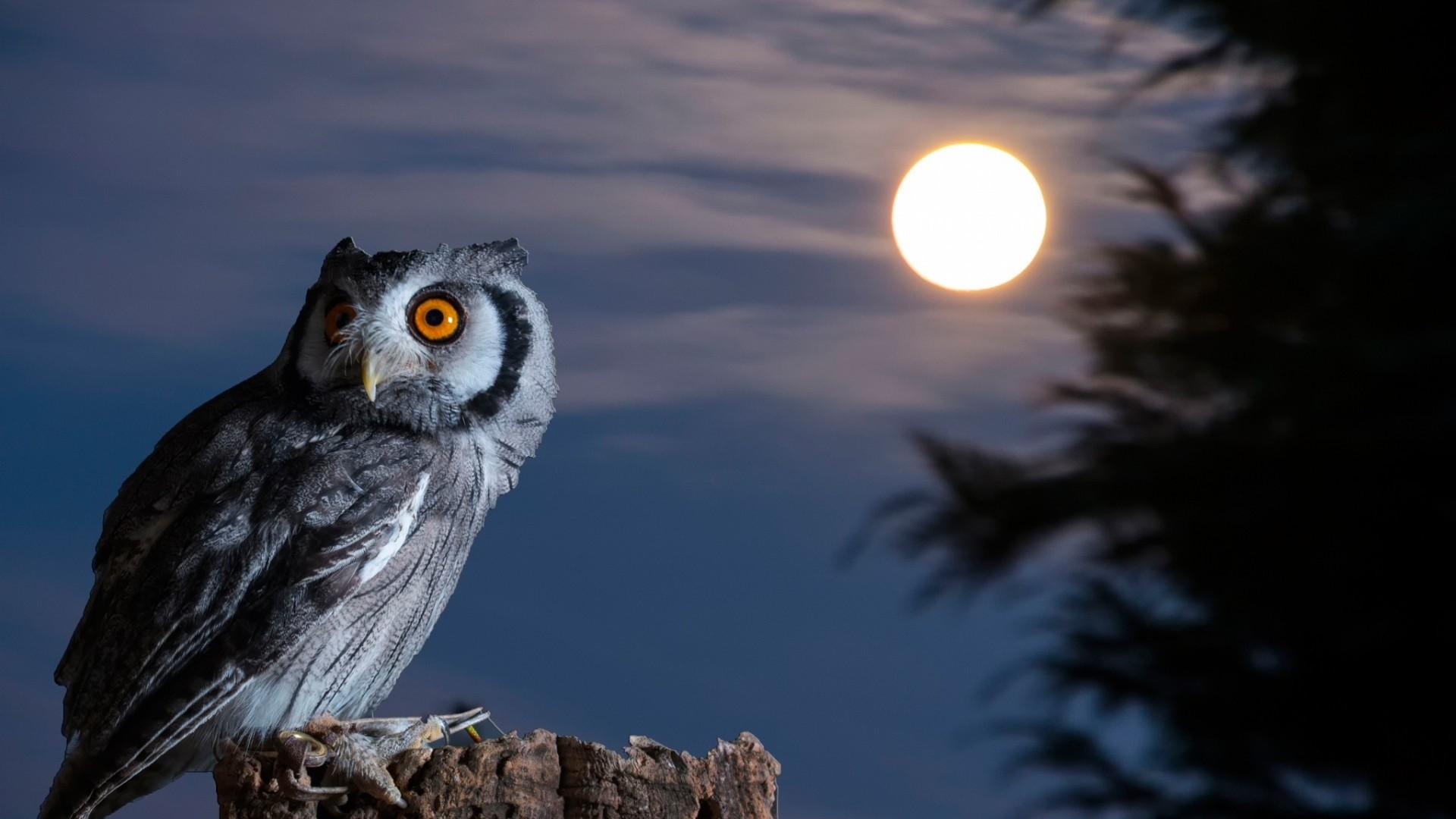 night owl moon hd wallpaper desktop wallpapers 4k high definition windows  10 mac apple colourful images