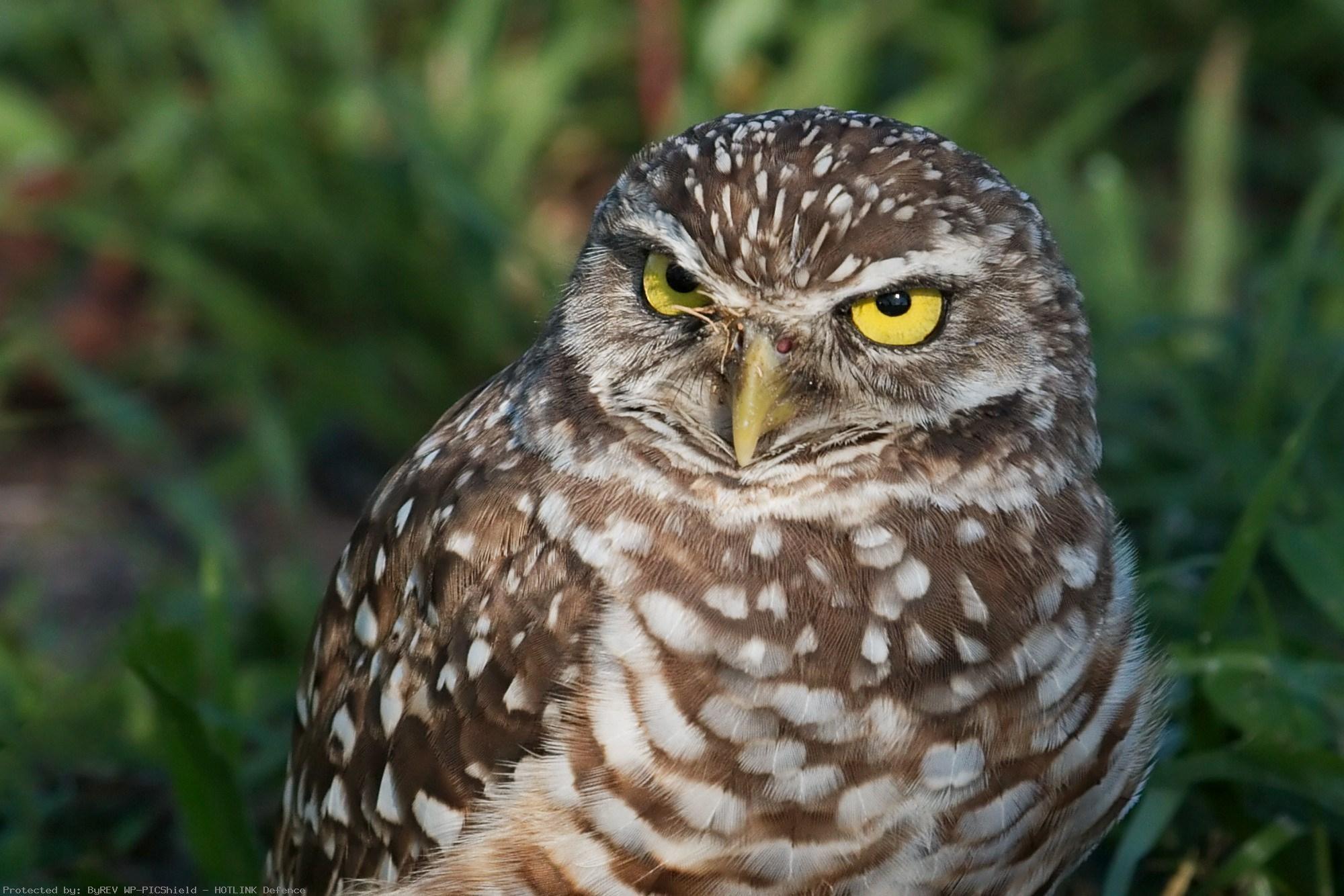 owl-hd-1080p-high-quality-wallpaper-wp3808970