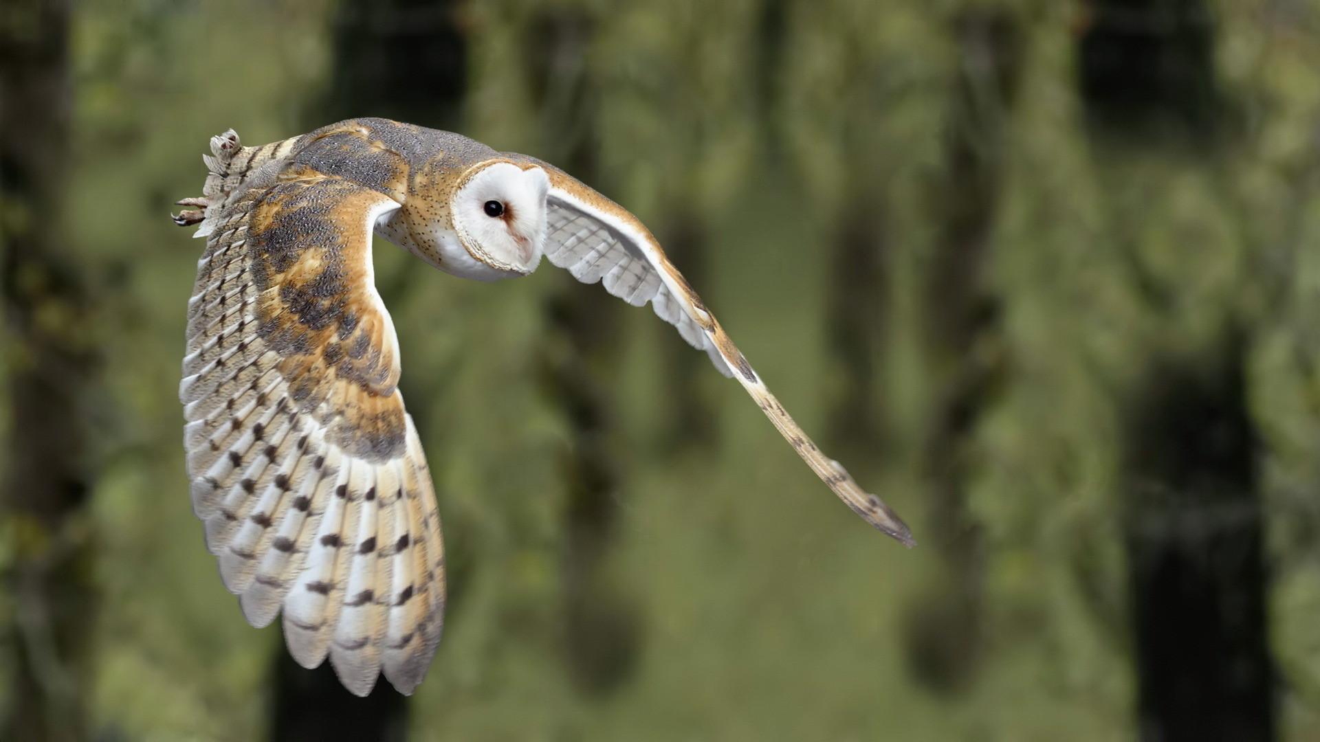 Barn Owl Wallpaper Mobile