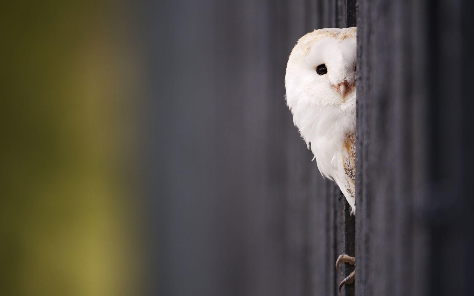 Cute Colorful Owl Wallpaper Full HD