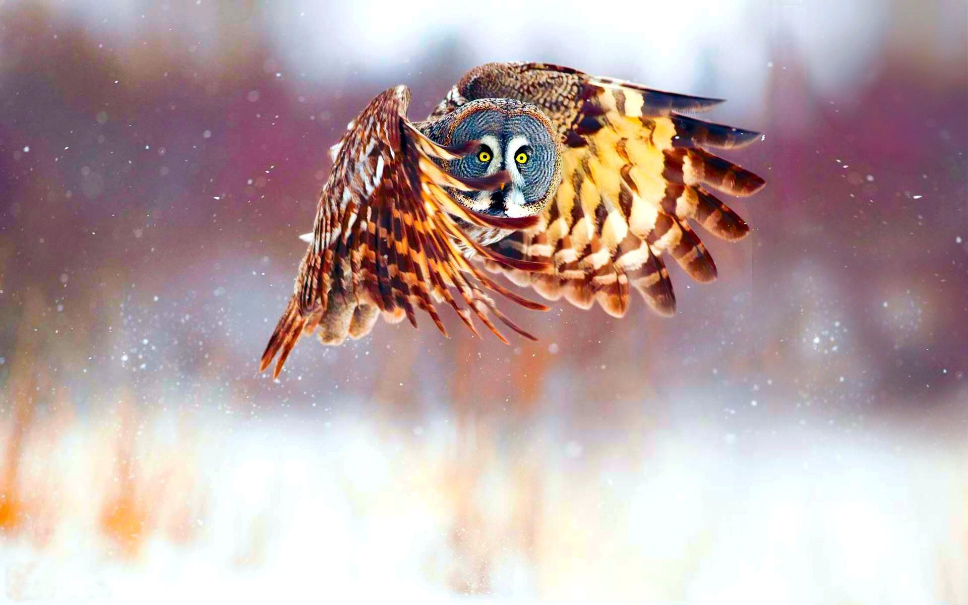 High Resolution Owl Wallpaper