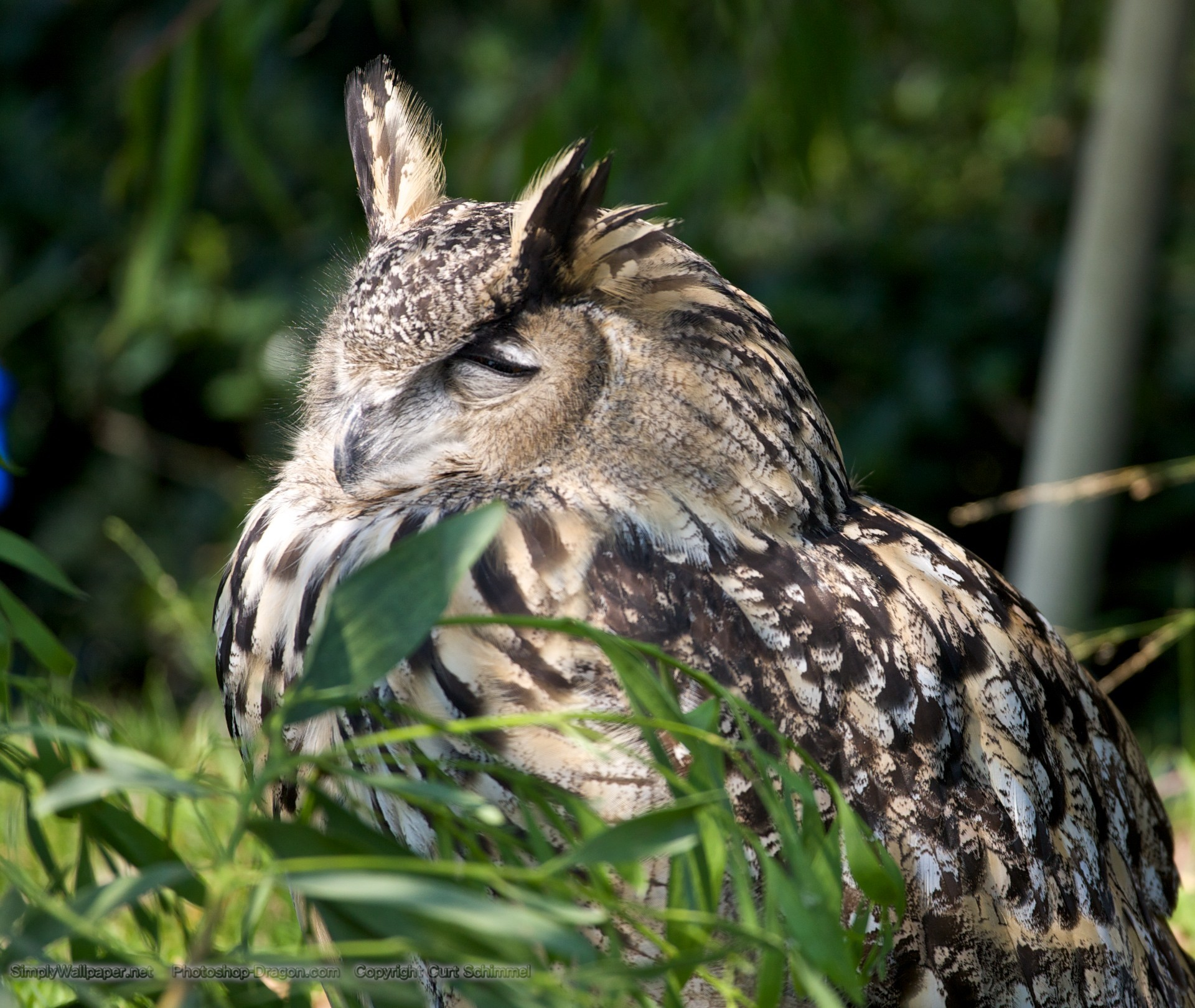 eagle owl resting on a branch · Eagle Owl wallpaper – Click picture for high  resolution …