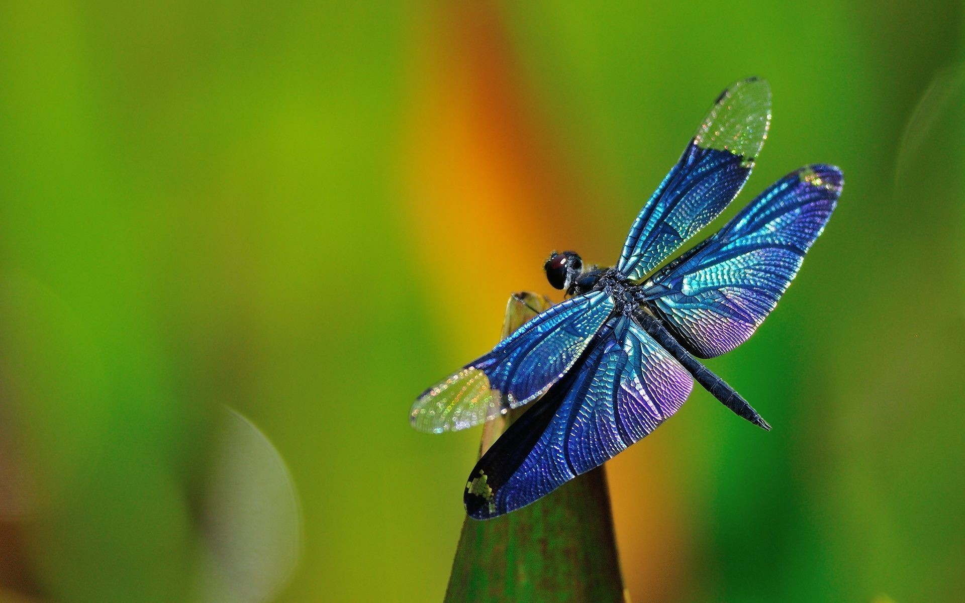 Dragonfly Background In Blue Stock Photos Image: 1920×1200 Dragonfly  Backgrounds (32 Wallpapers