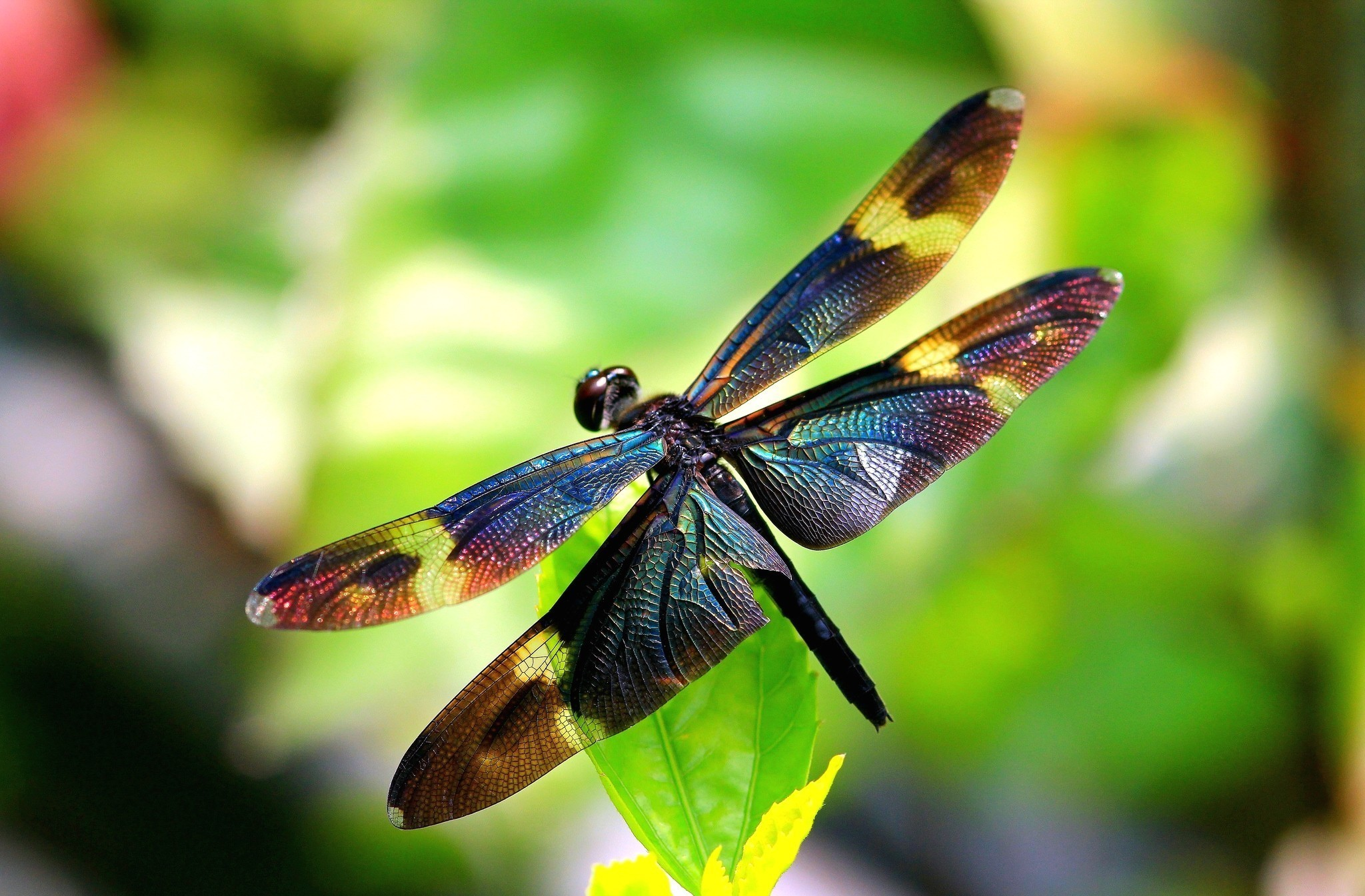 Animal – Dragonfly Wallpapers and Backgrounds ID : 410505
