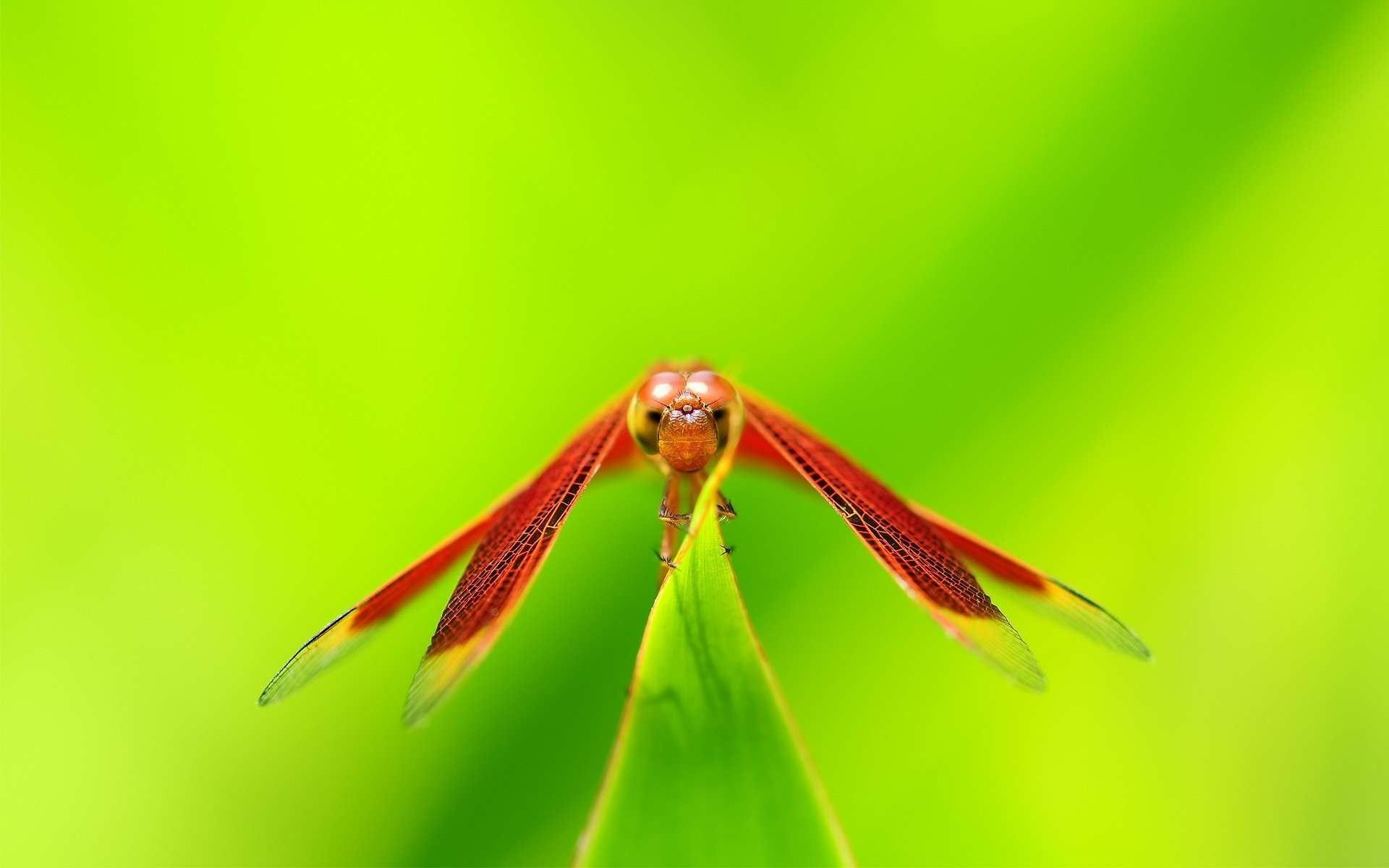 dragonfly wallpaper cool. Â«Â«