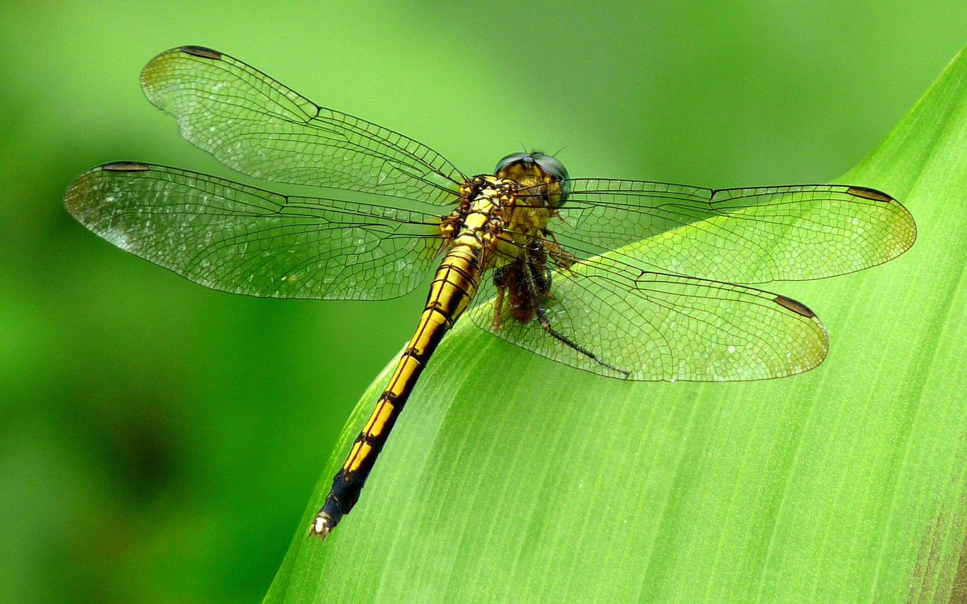 175 Dragonfly Wallpapers | Dragonfly Backgrounds