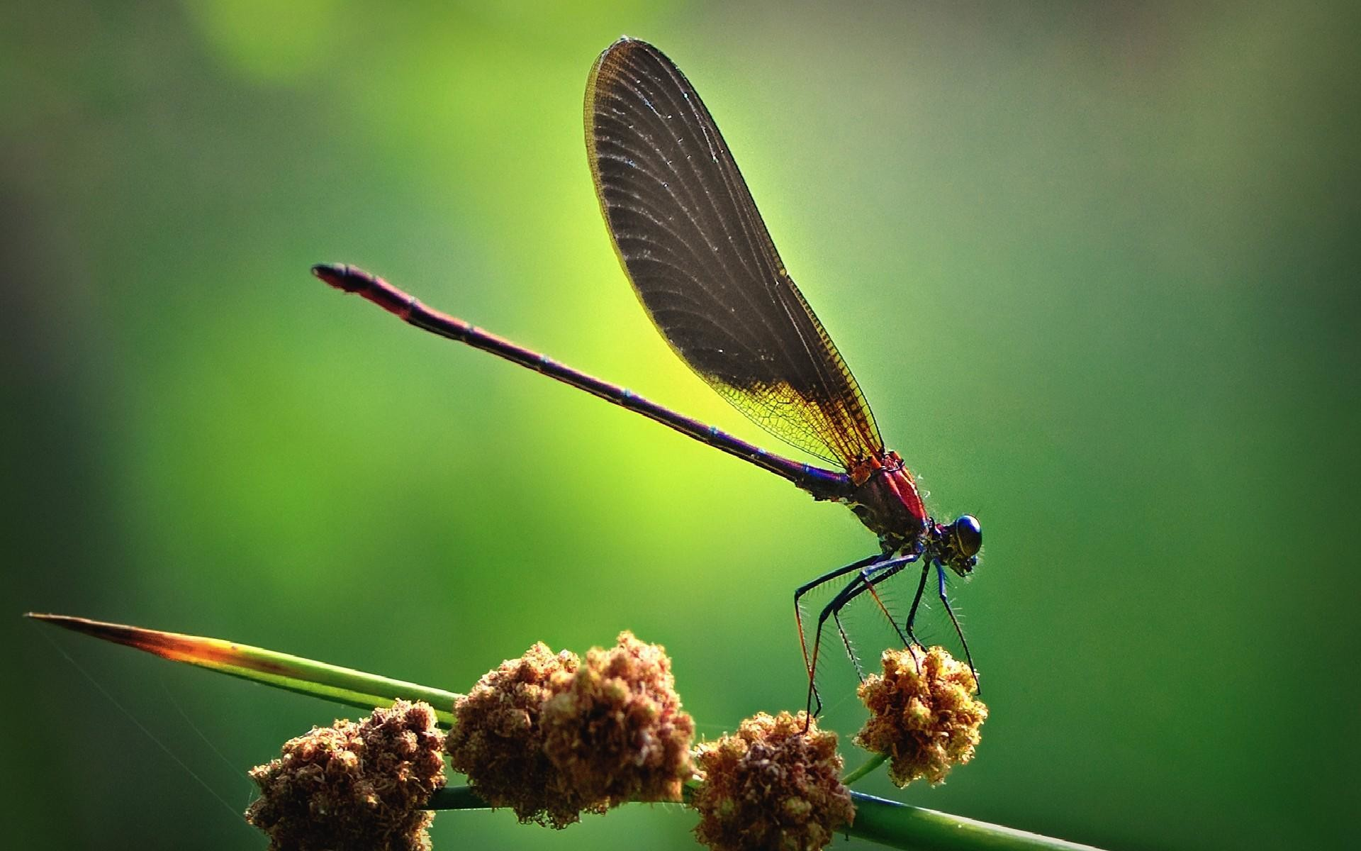 Dragonfly HD Wallpapers – HD Wallpapers Inn