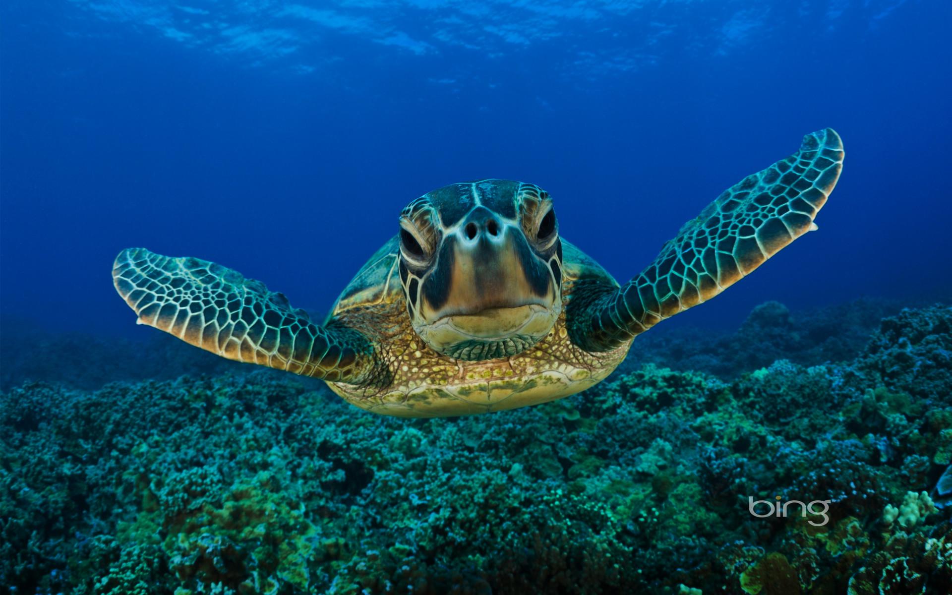 Free Hug A Sea Turtle Wallpapers, Free Hug A Sea Turtle HD Wallpapers .