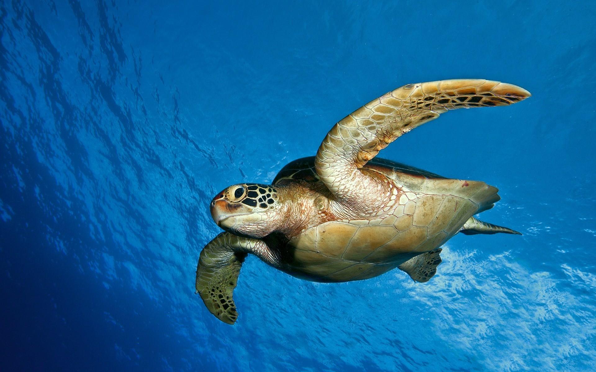 sea turtles wallpaper. Â«Â«
