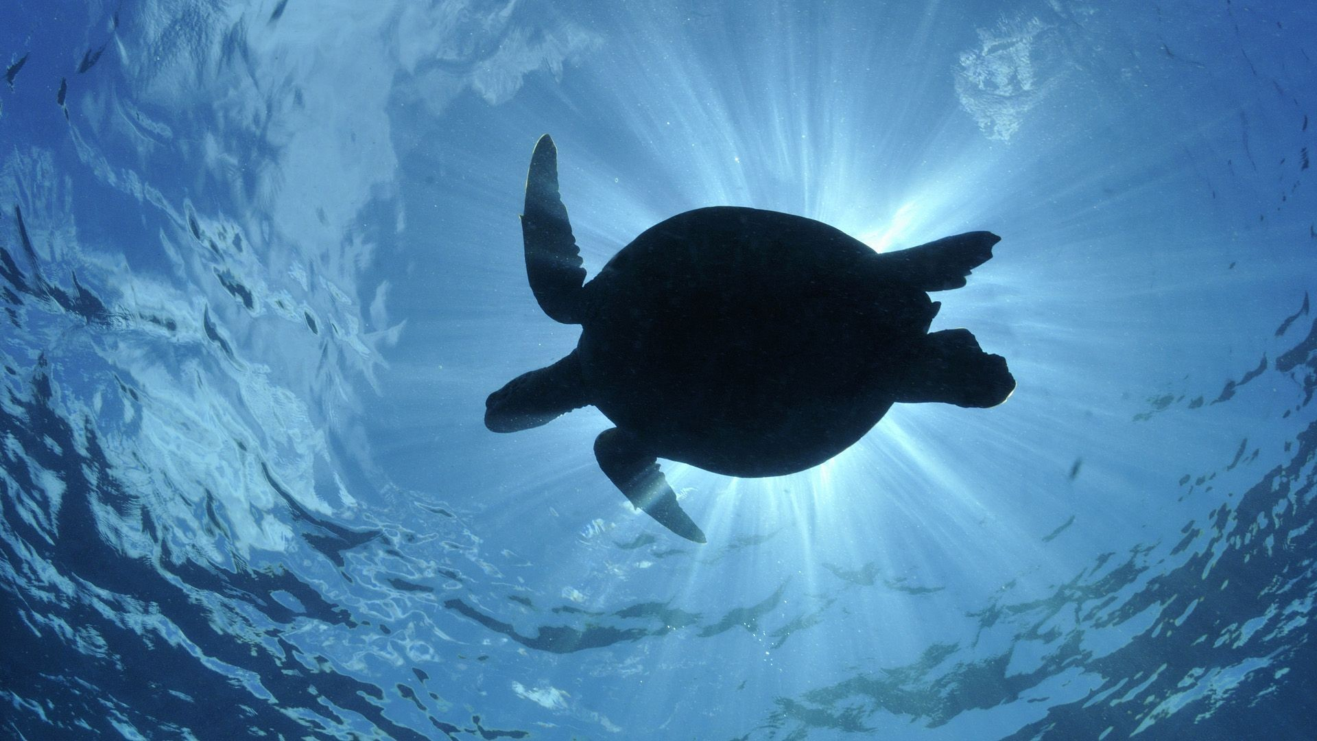 Turtle Wallpaper Desktop Background #mhre >