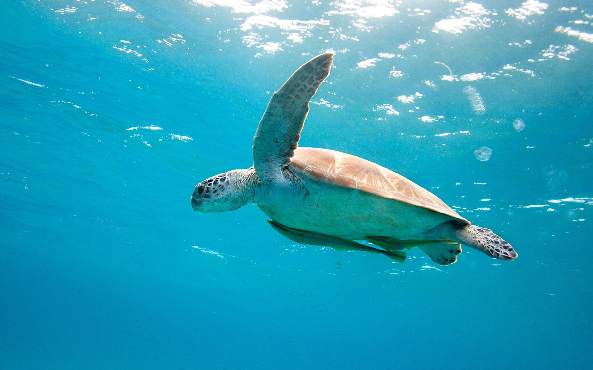 Ultra HD hawksbill turtle | Ultra HD Wallpapers | Pinterest | Turtle and Sea  turtles