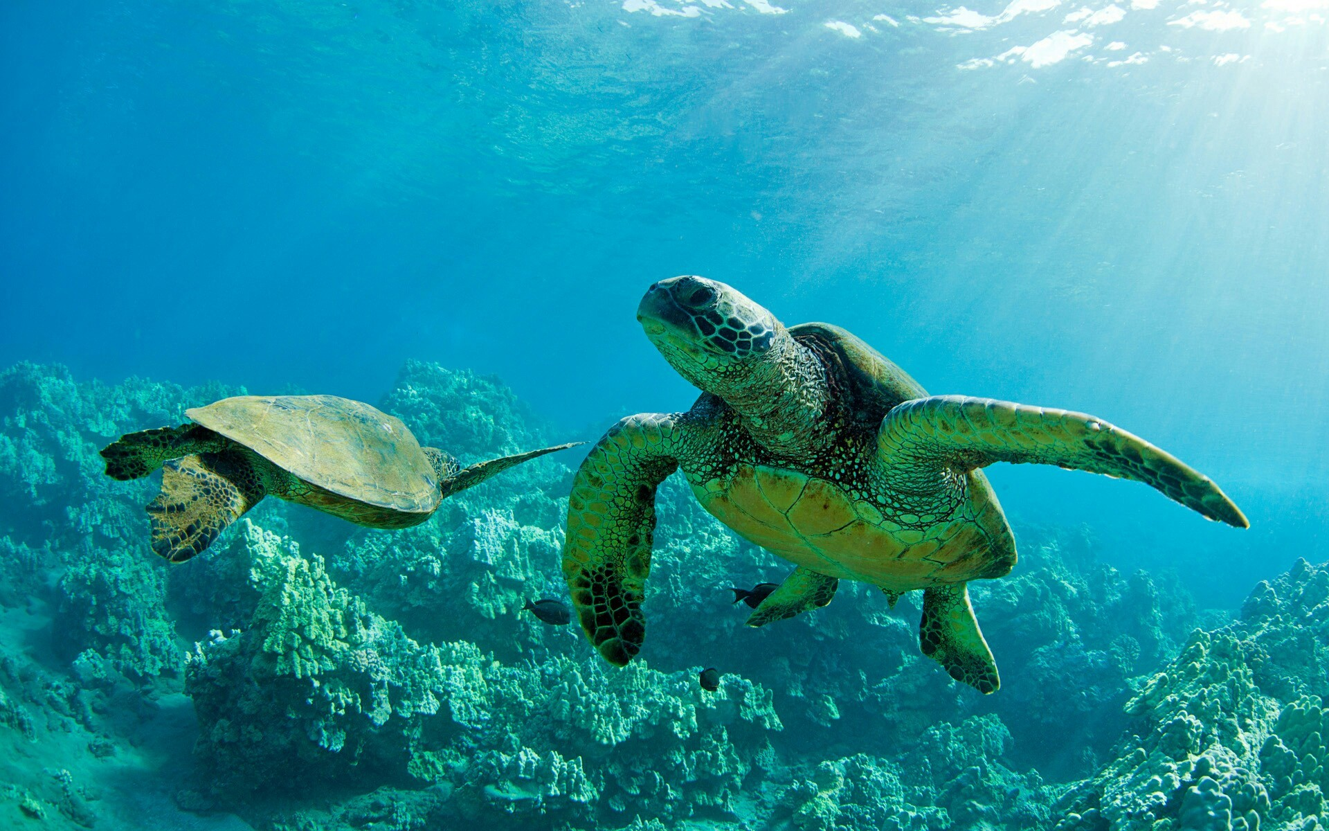 Turtle · SeacTurtles · Windows WallpaperWallpaper BackgroundsDesktop  WallpapersWater TurtlesSea …