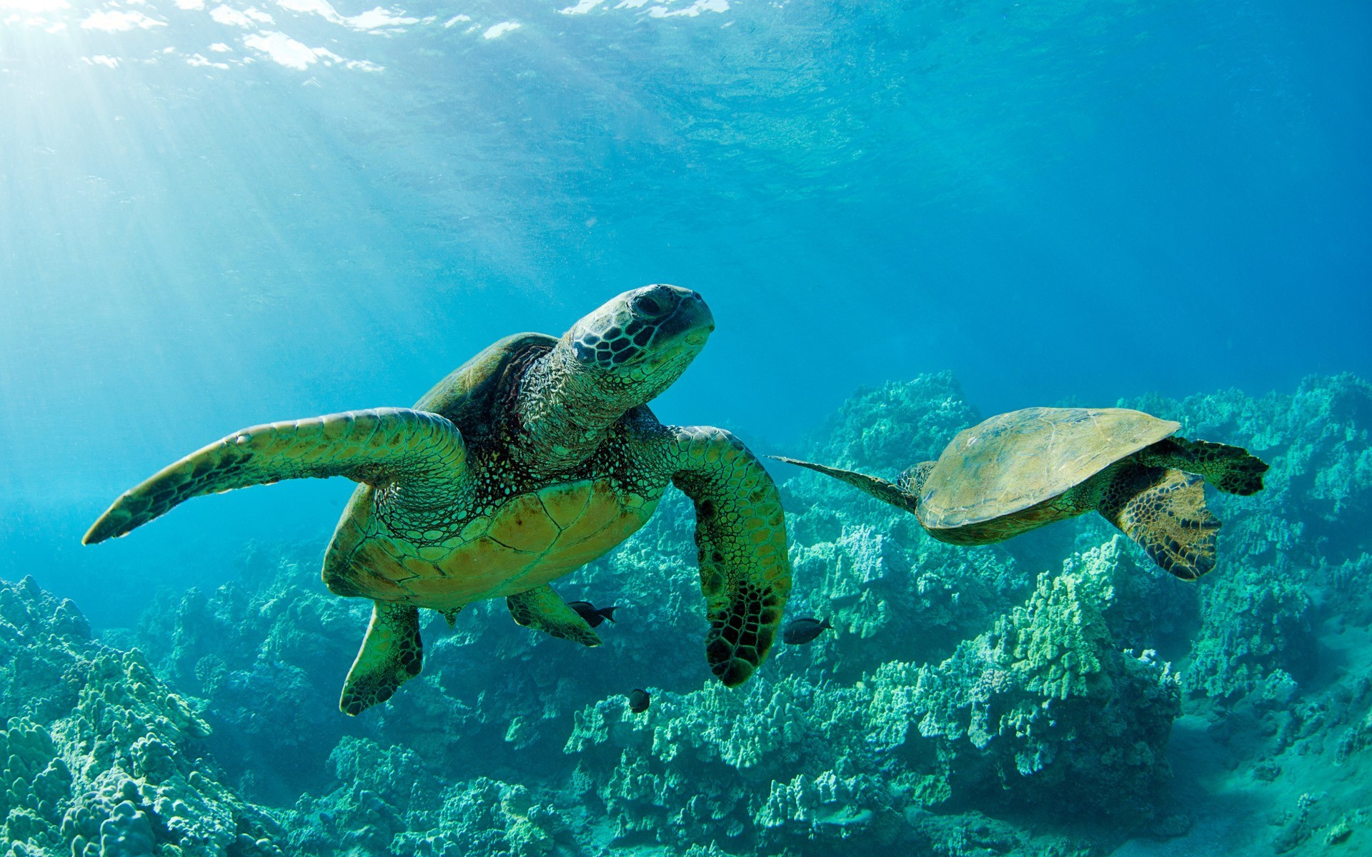 animals, Turtle, Nature, Landscape Wallpapers HD / Desktop and Mobile  Backgrounds