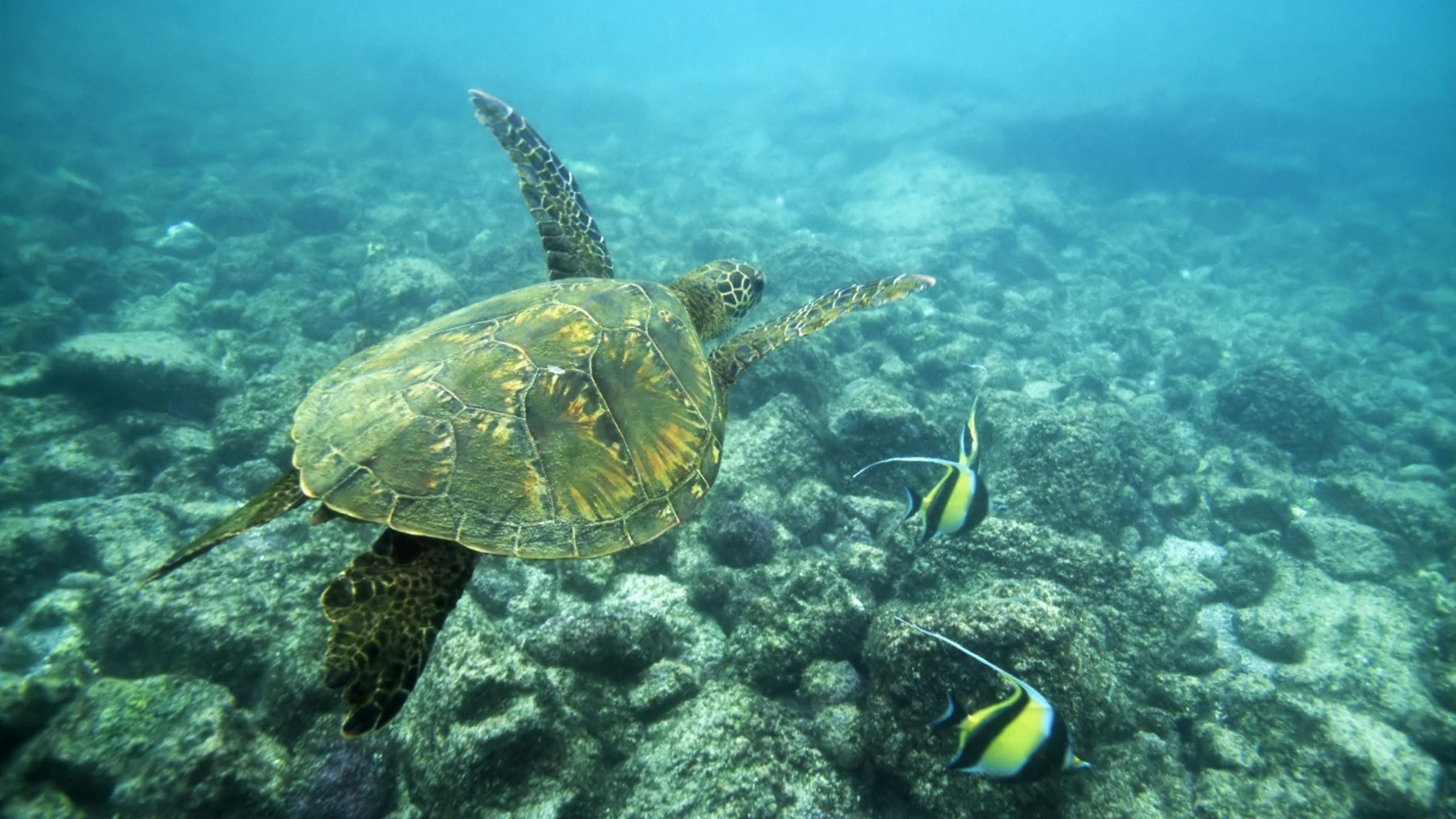 Sea Turtle 698907
