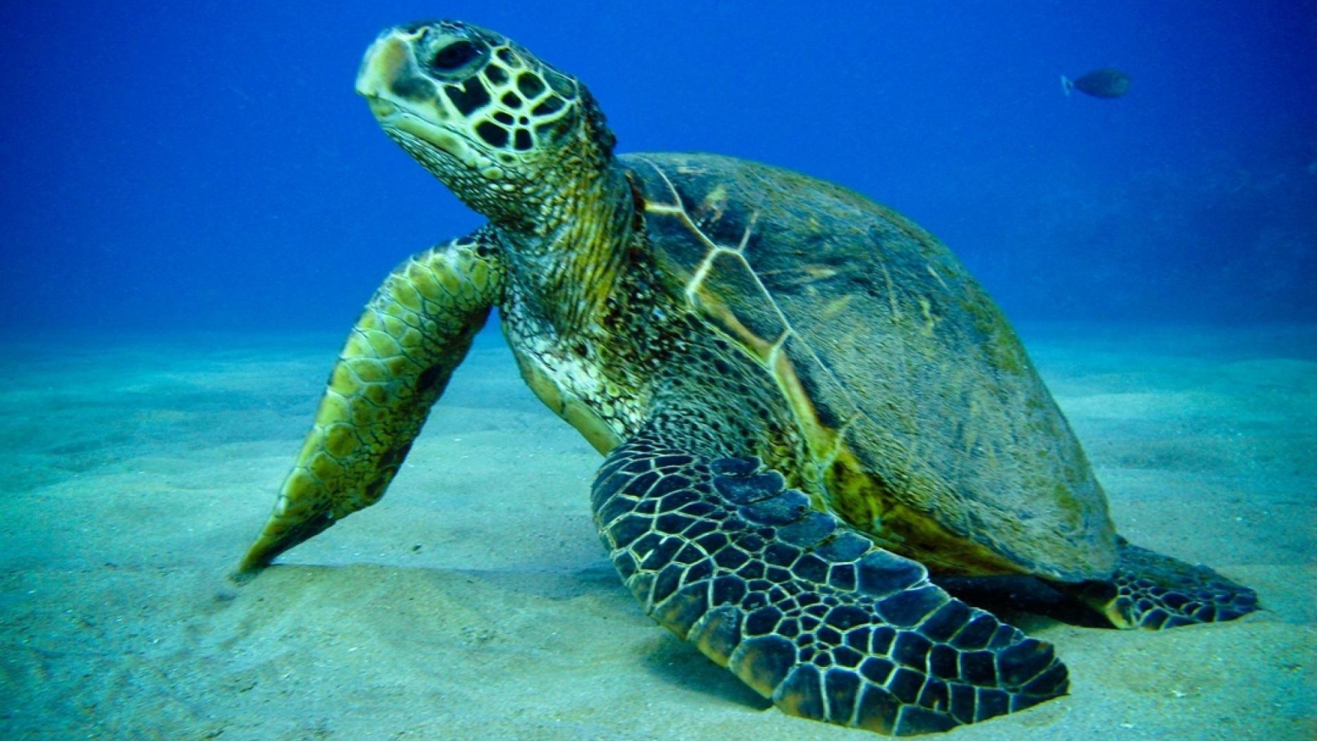 Turtle Sea Fish Photos HD Wallpaper