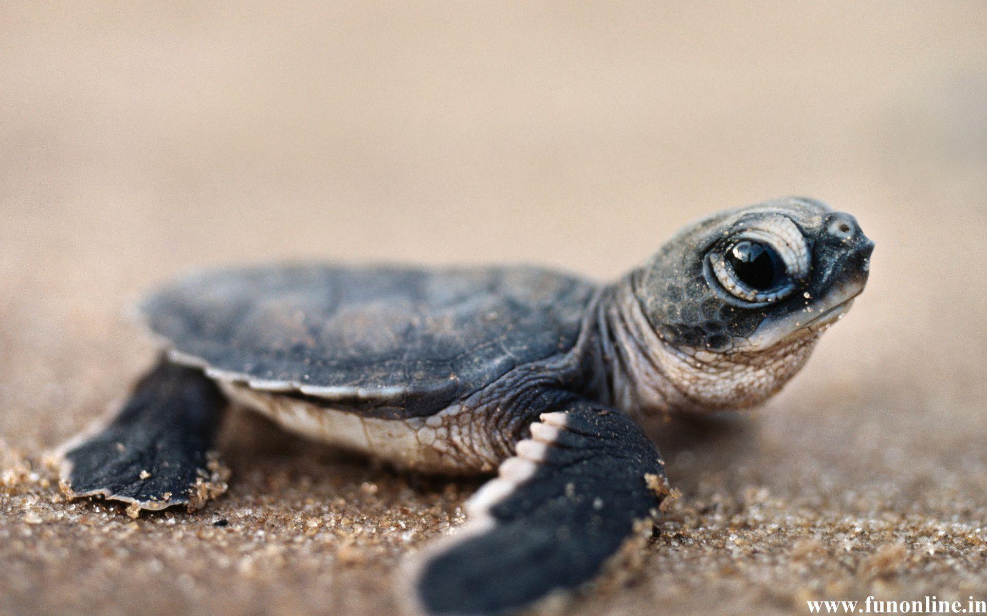 Sea Turtle Wallpaper for Computer – WallpaperSafari
