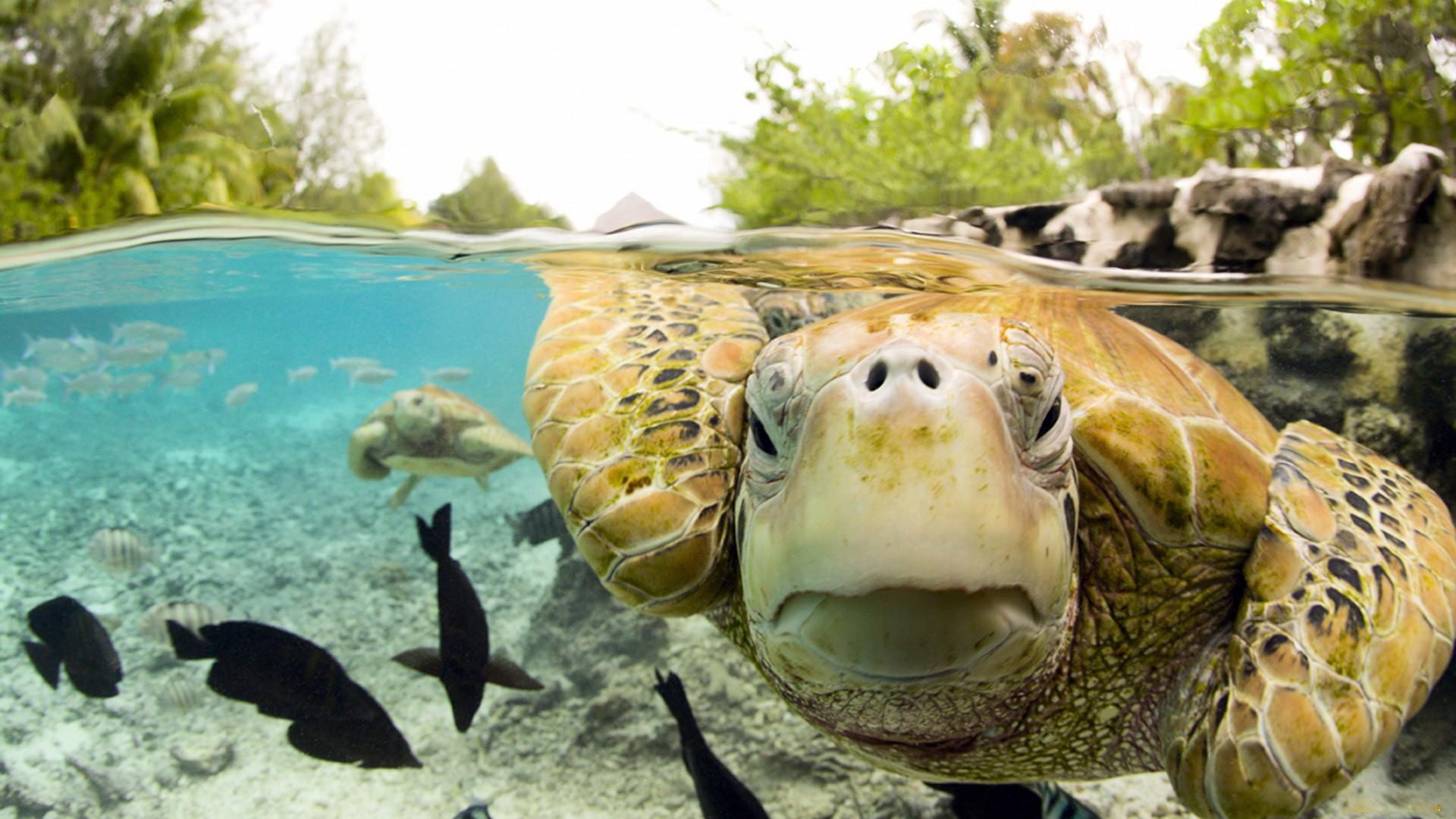 Tags: animal, turtle