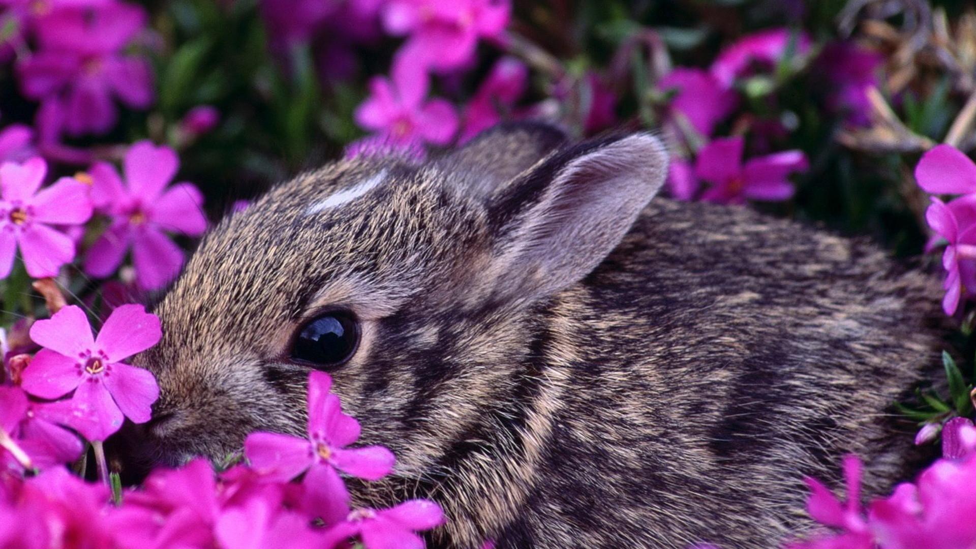 Beautiful Spring Desktop Wallpaper   … , animals, large on the  desktop