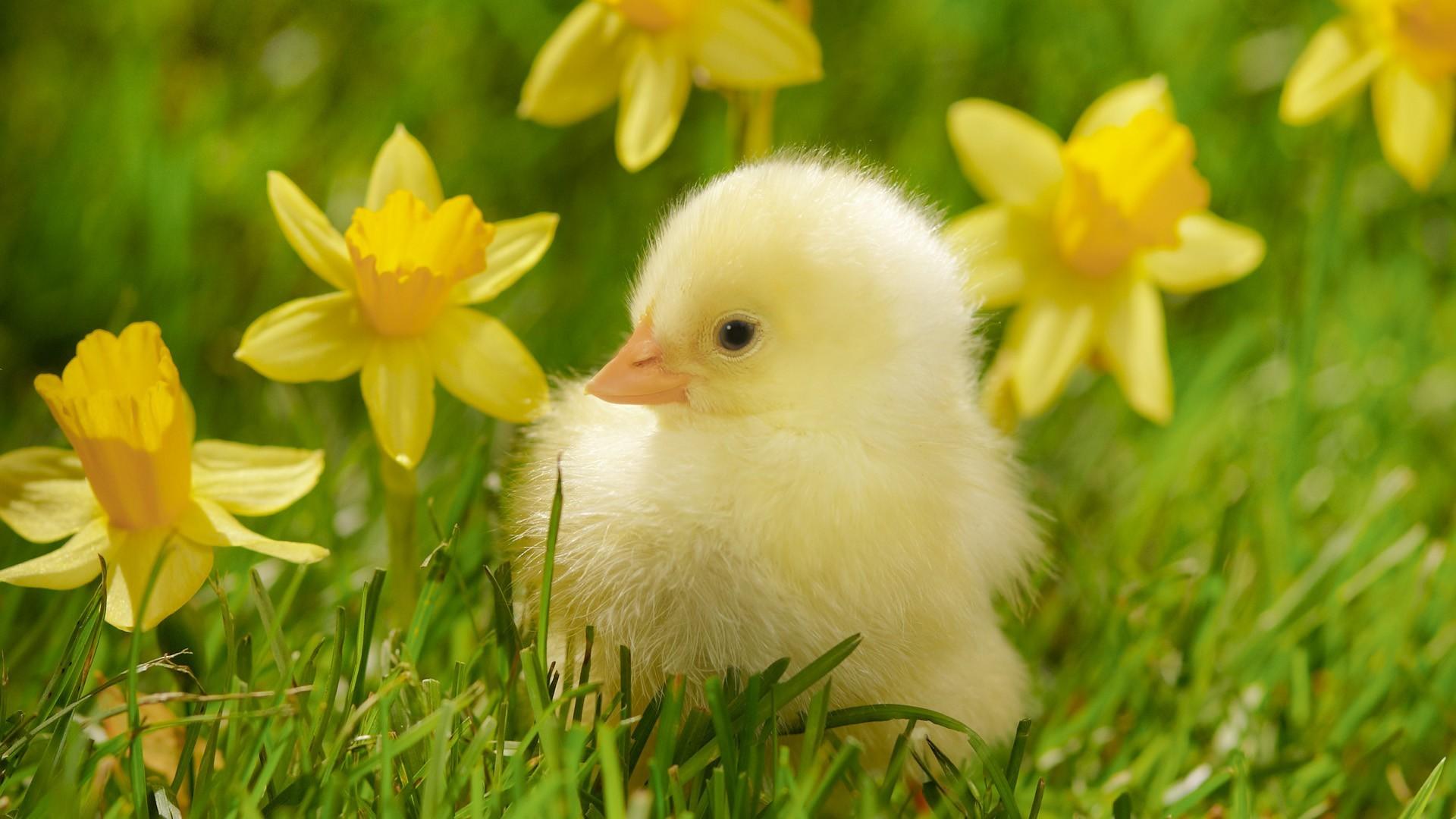 Spring Blooms Bird Desktop Image Wallpaper, Size: .
