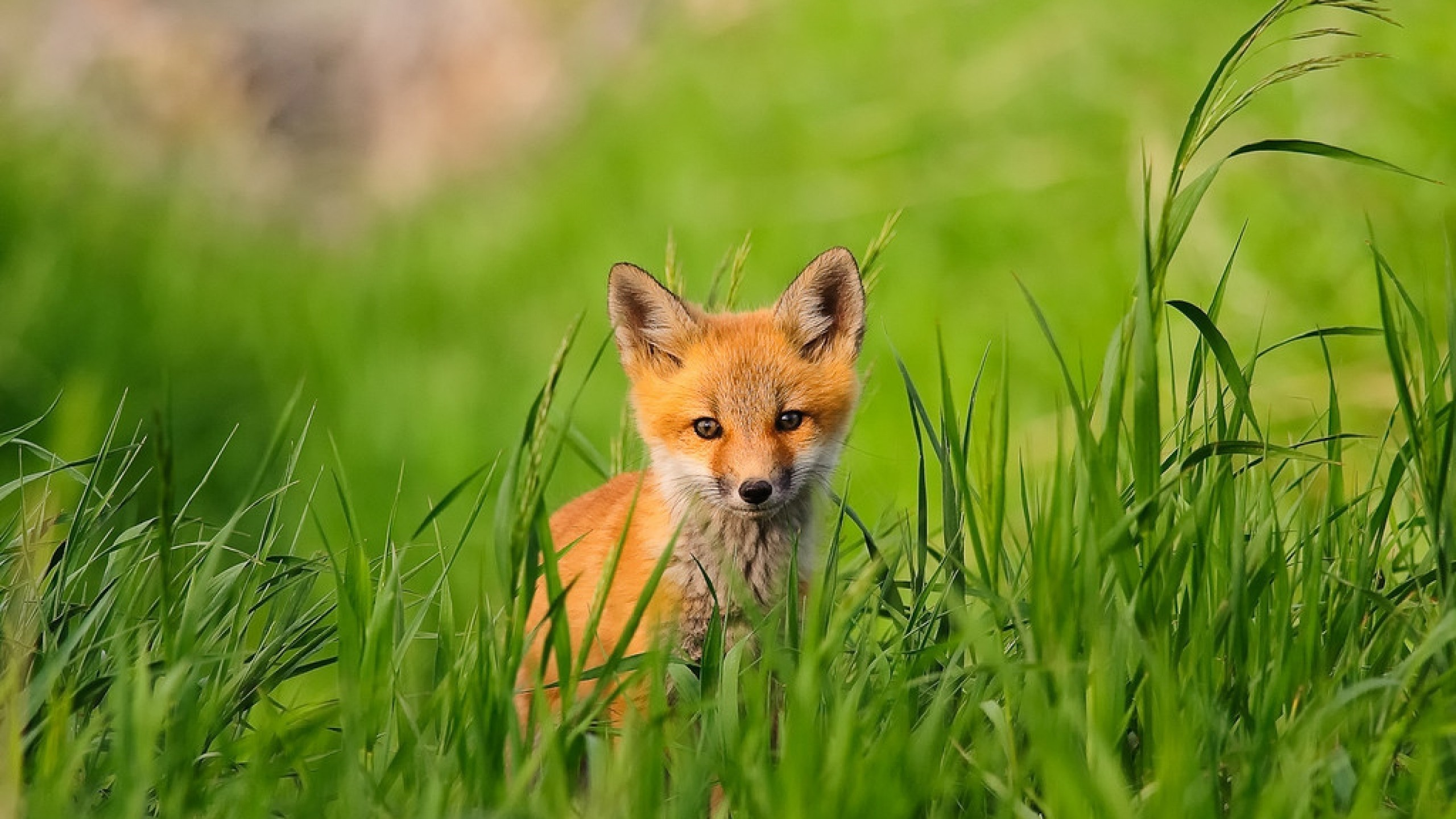 Animals Wallpapers – Page 16. fox photos