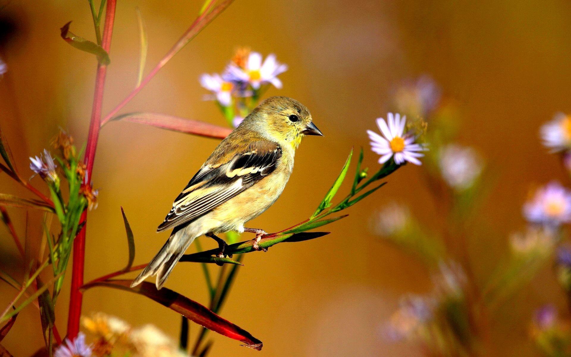 Spring bird desktop wallpaper – Attractive Birds Hd Wallpapers For Desktop.  Download