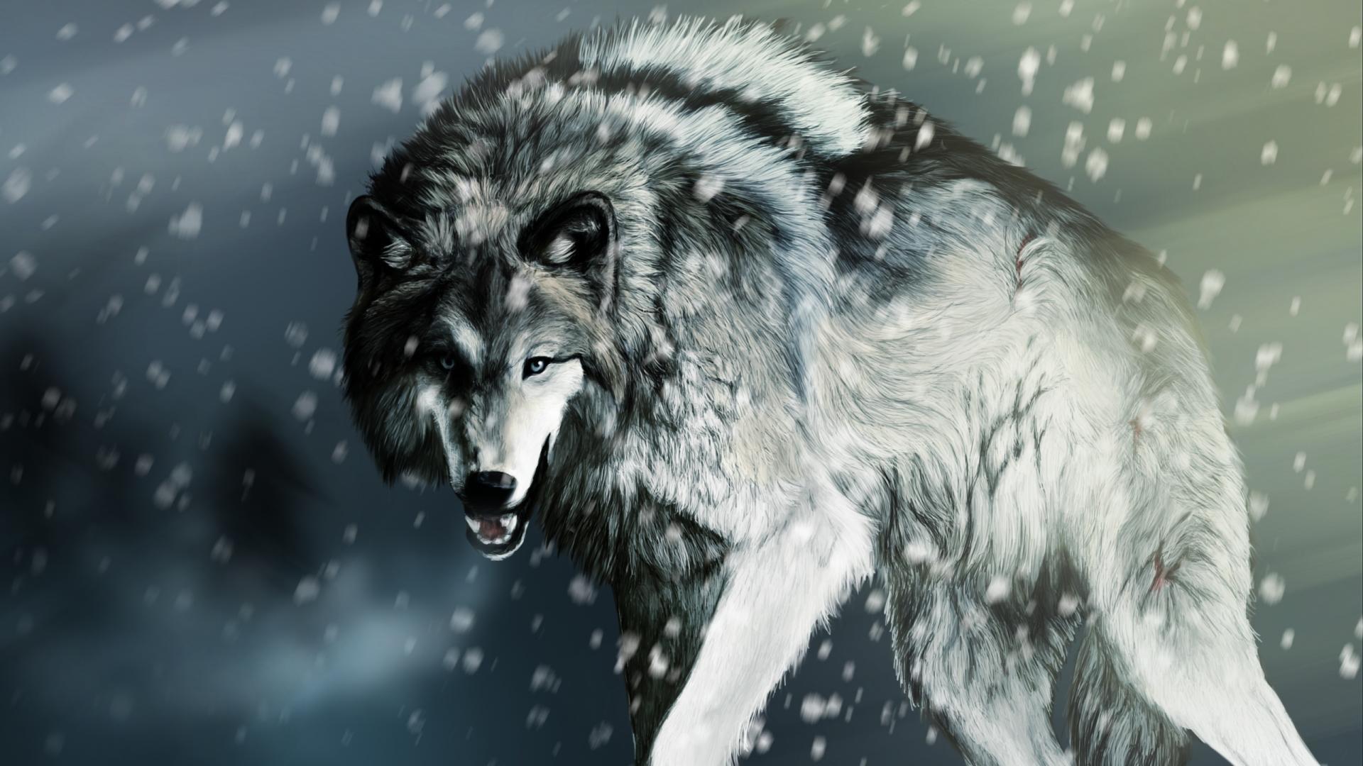 White Wolf wallpaper – 1246273
