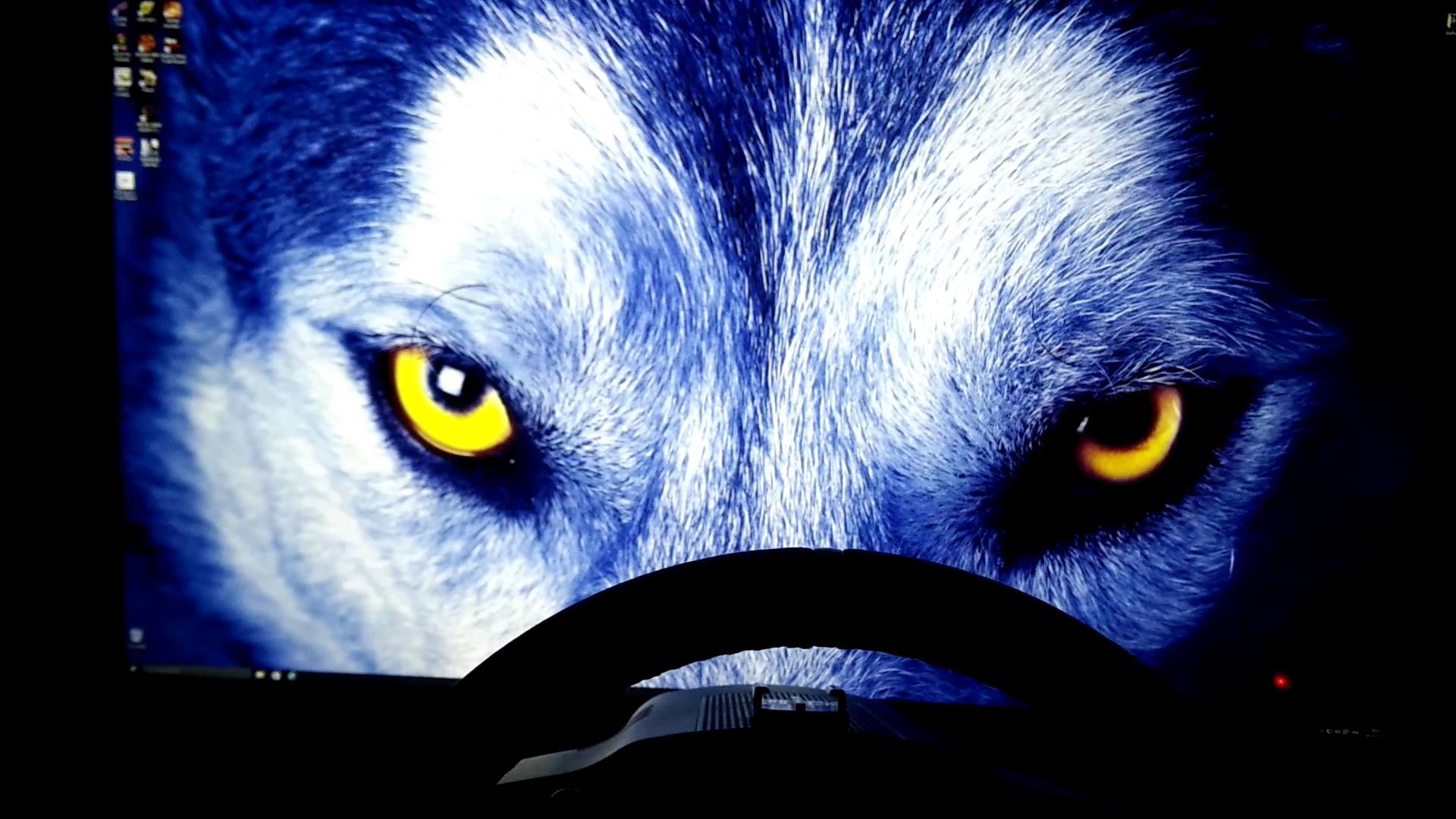 Wolf wallpaper in 4k