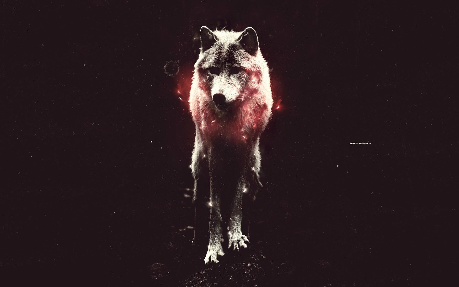 … abstract wolf wallpaper wallpapersafari …