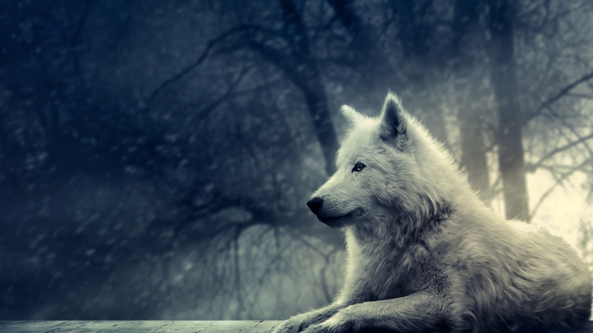 wolf wallpapers for deskto