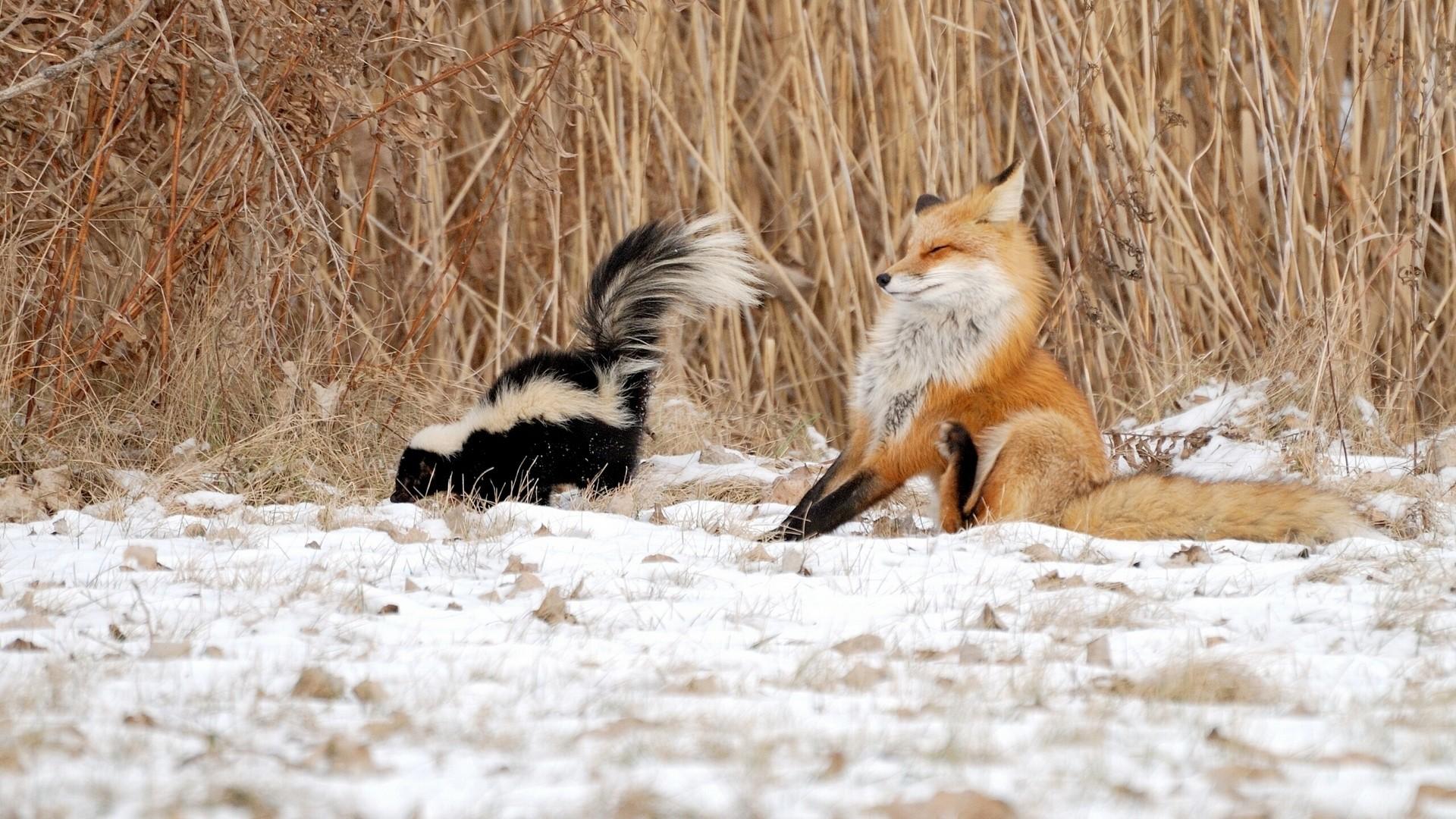 Funny Winter Animal Wallpaper