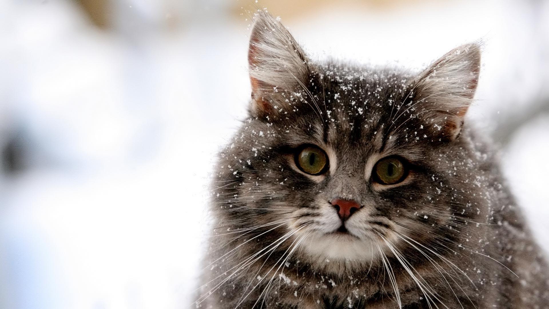 Cute Cat Winter Snow HD Wallpaper Cute Cat Winter Snow