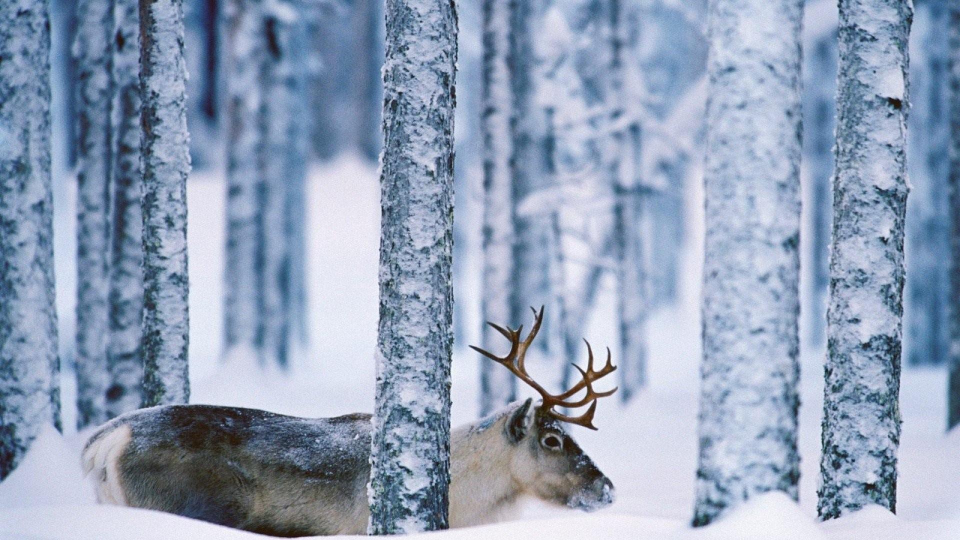 Deer Tag – Deer Landscape Nature Winter Snow Funny Animals Desktop Wallpaper  for HD 16: