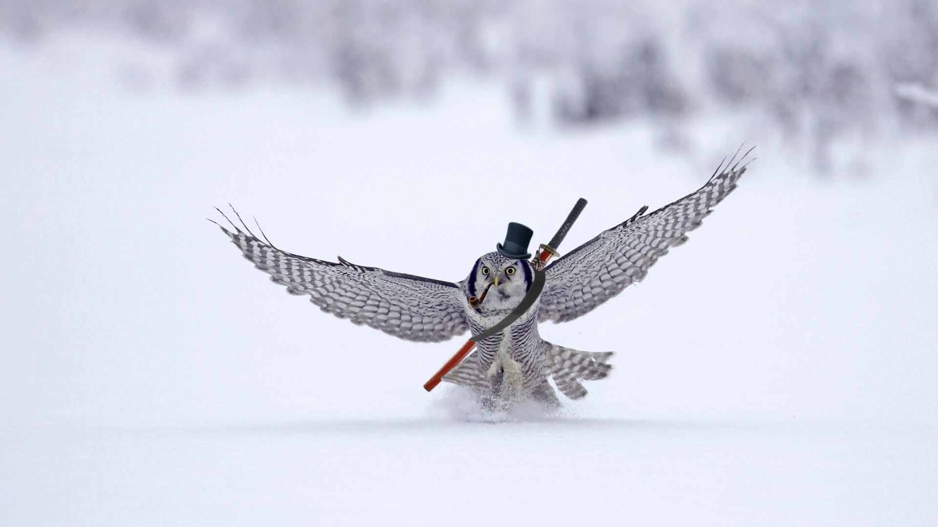 wallpaper winter · snow · animals