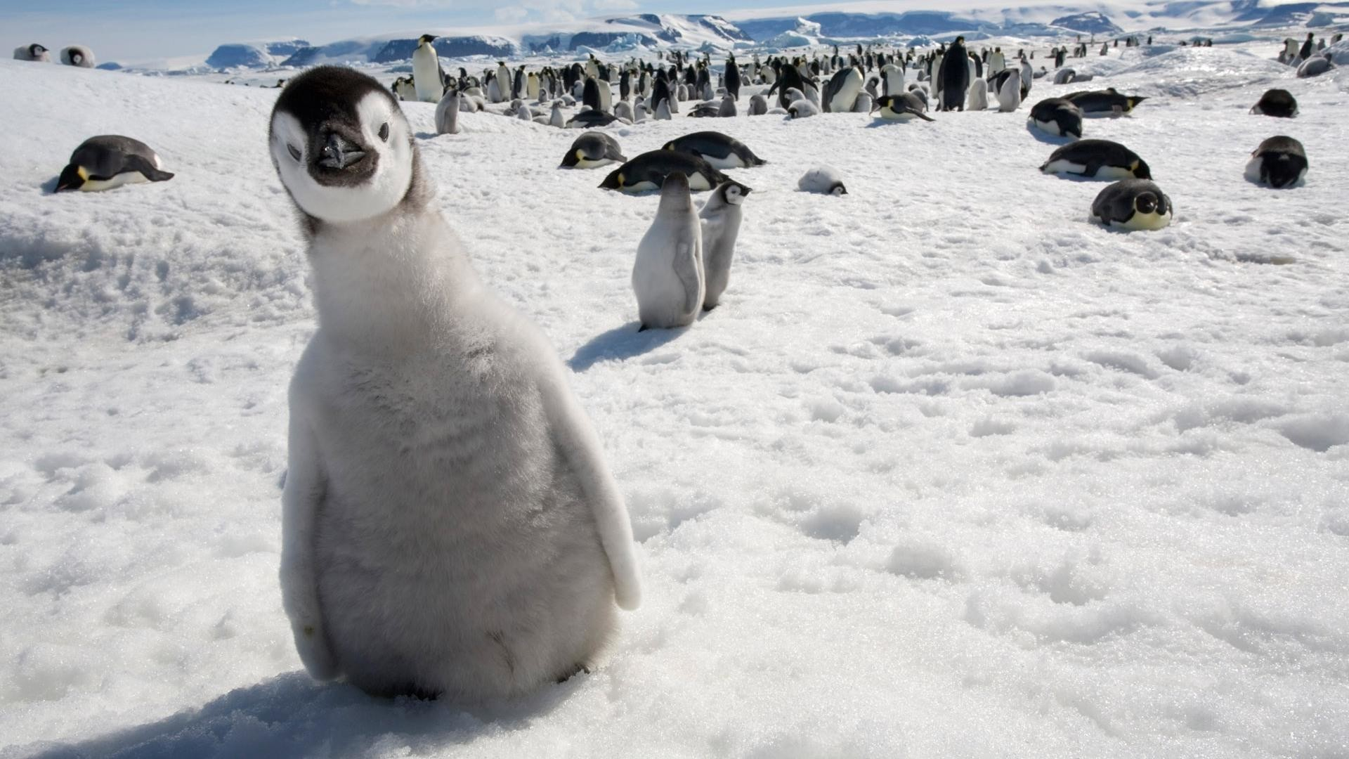 Funny-penguin-pictures-31.jpg