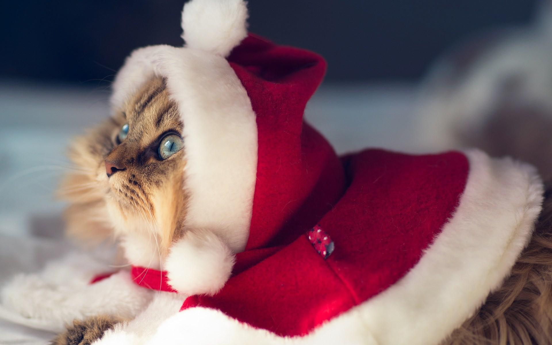 winter-cat-christmas-santa-claus-photo-funny-wallpaper–  Magic4Walls.com