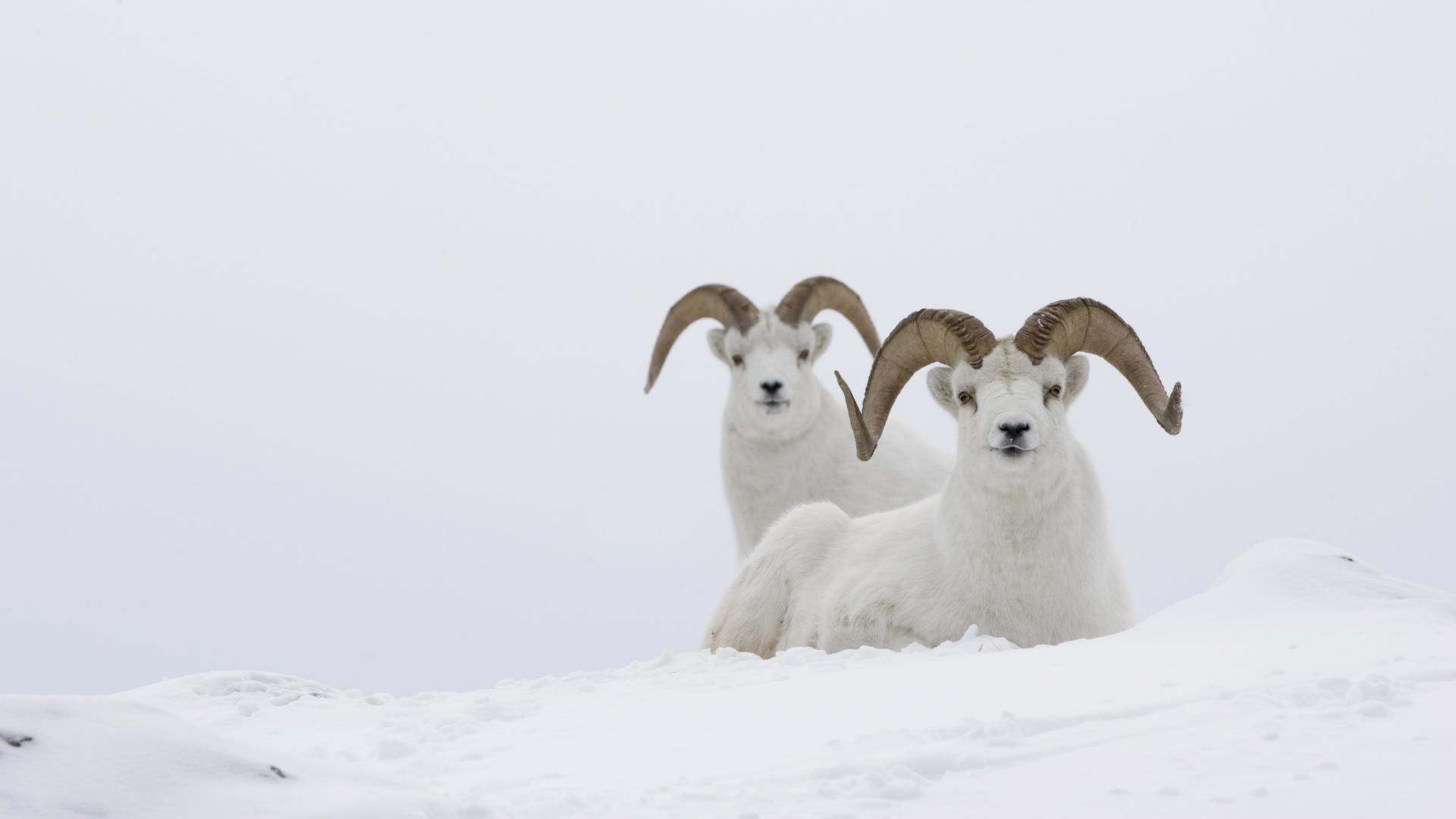 Winter animals wallpaper – photo#4