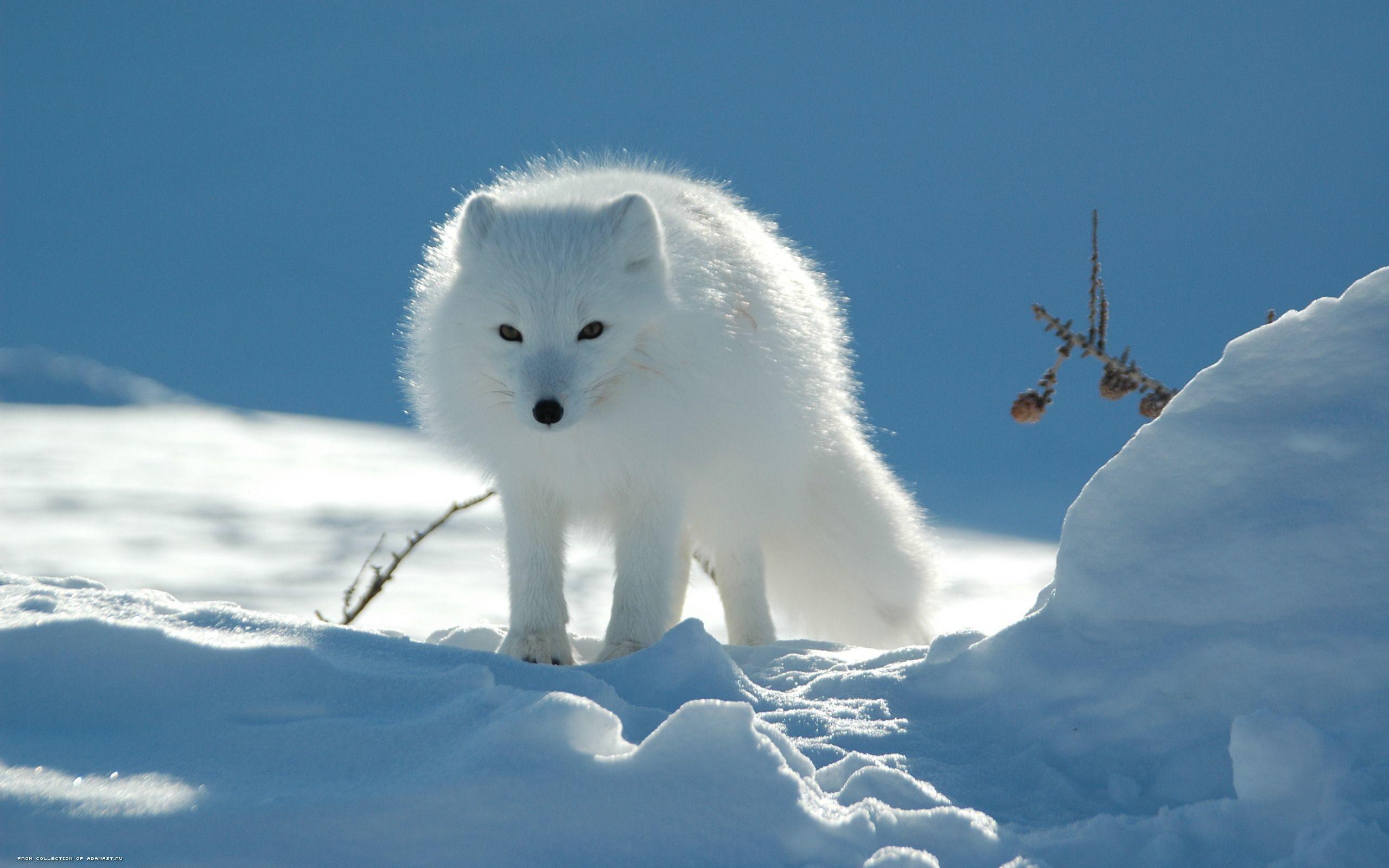 Free Winter Animal Desktop Wallpaper | wallpaper, wallpaper hd .
