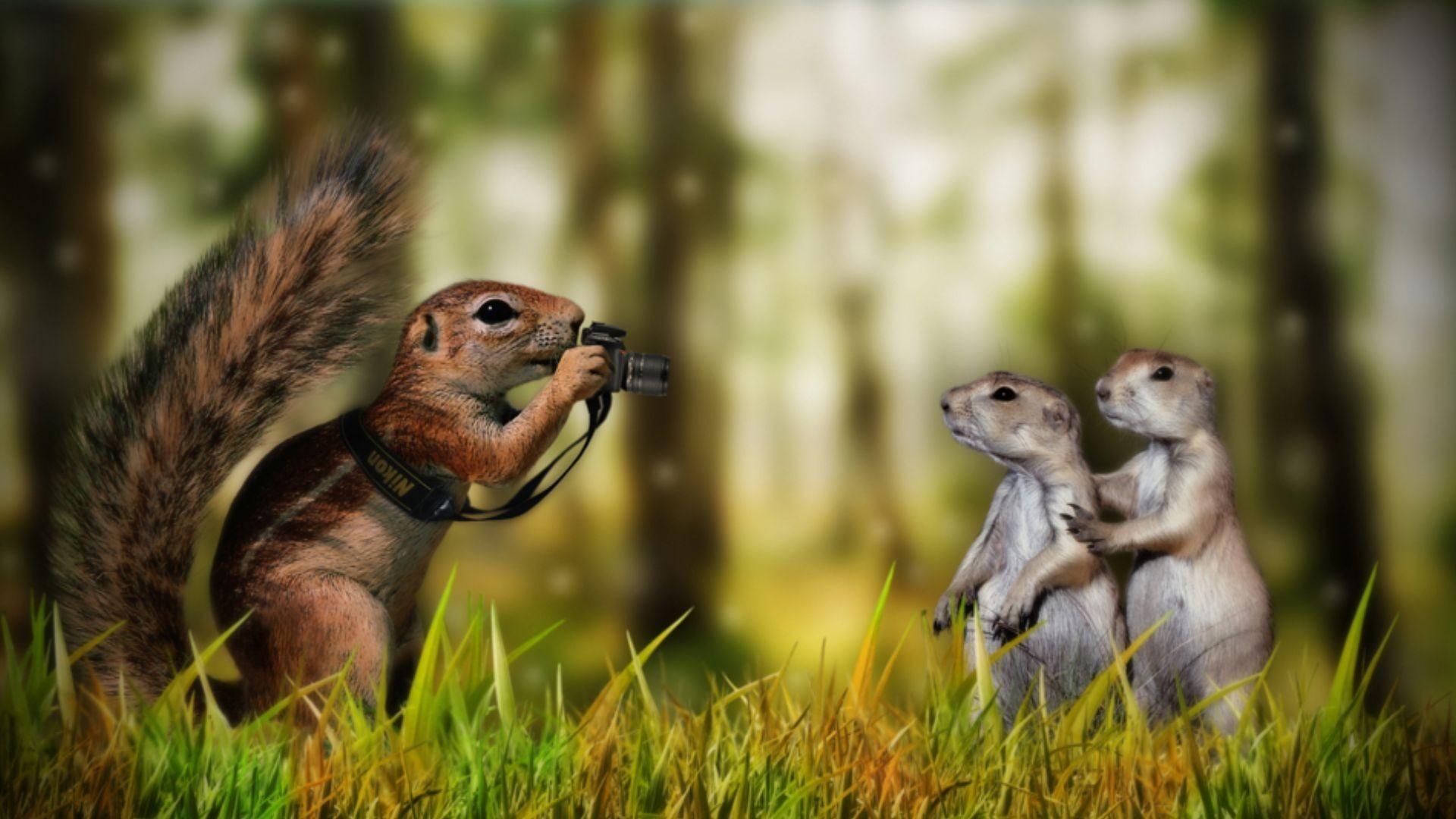 Animal · Funny Animal Wallpaper …