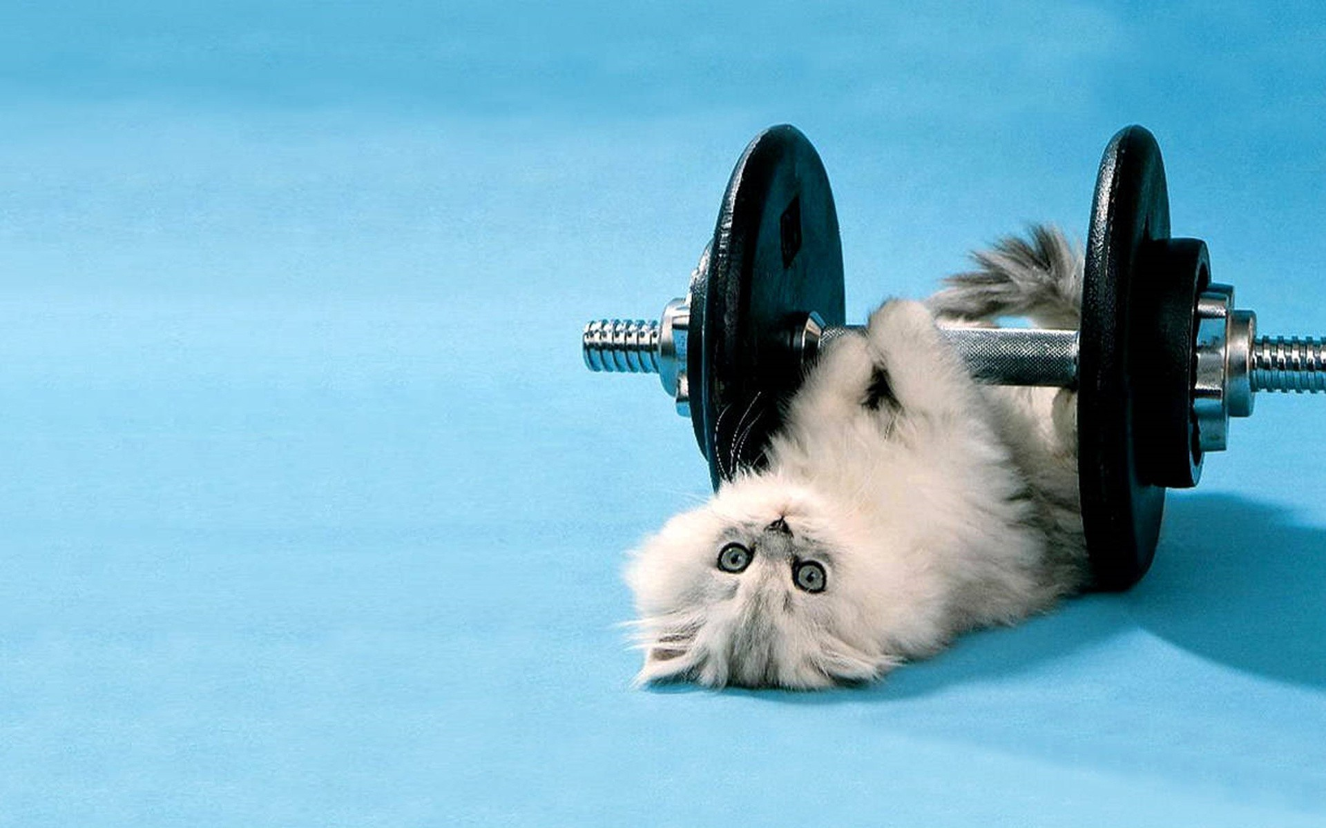 Cat Funny Animal HD Wallpaper