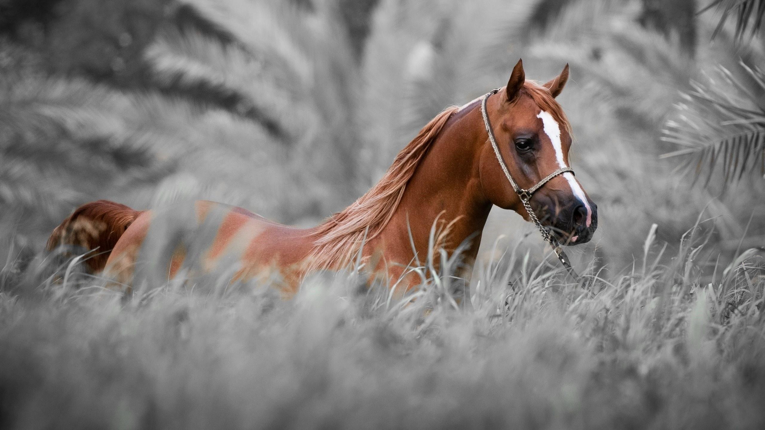 horse wallpaper hd | horse wallpapers hd