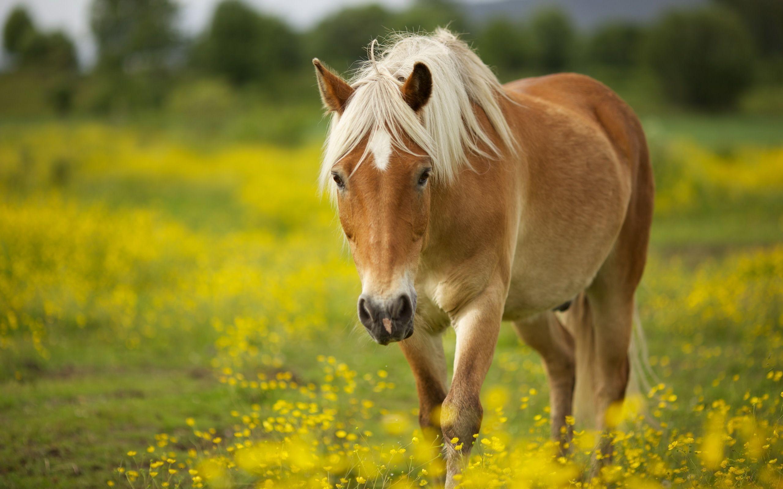 2017-03-15 – horse wallpaper desktop, #1418204 | ololoshka | Pinterest | Horse  wallpaper, Hd widescreen wallpapers and Widescreen wallpaper