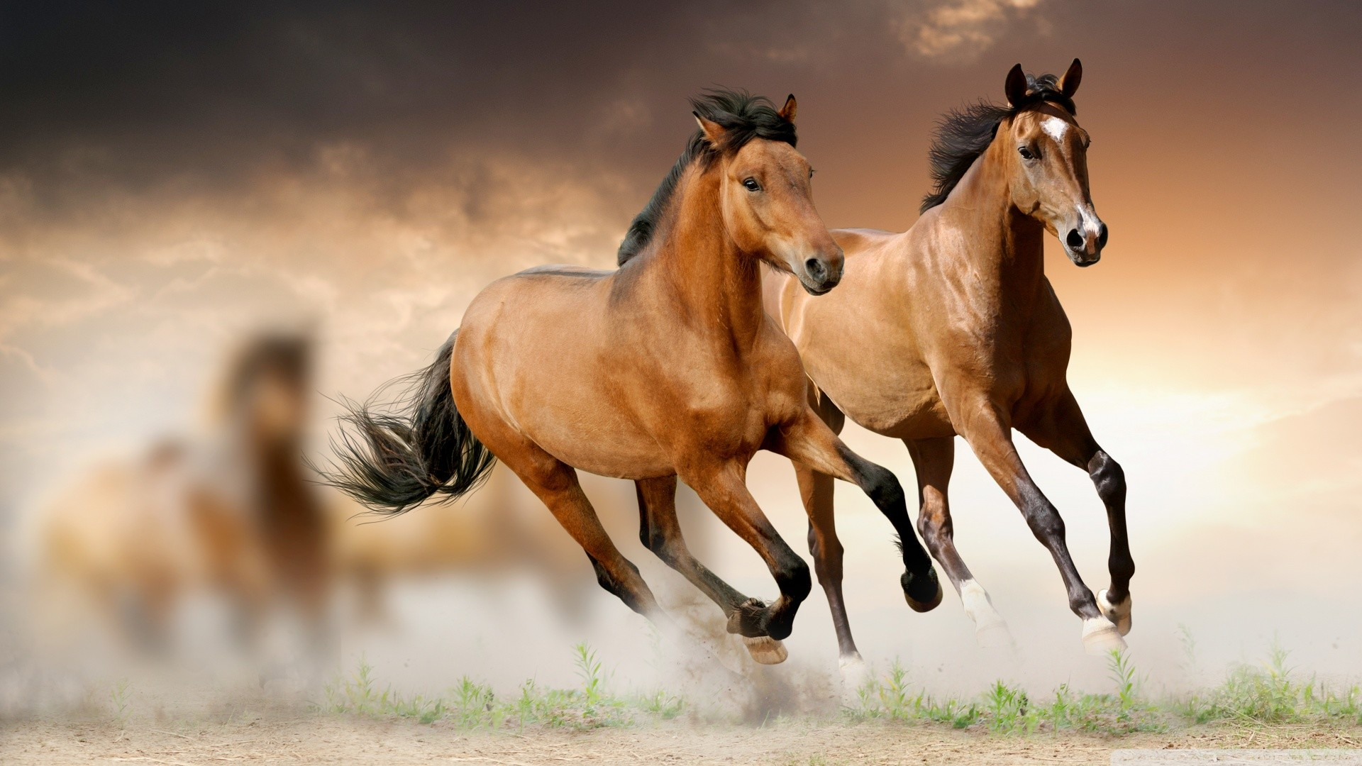 Horse Wallpapers | Best Wallpapers