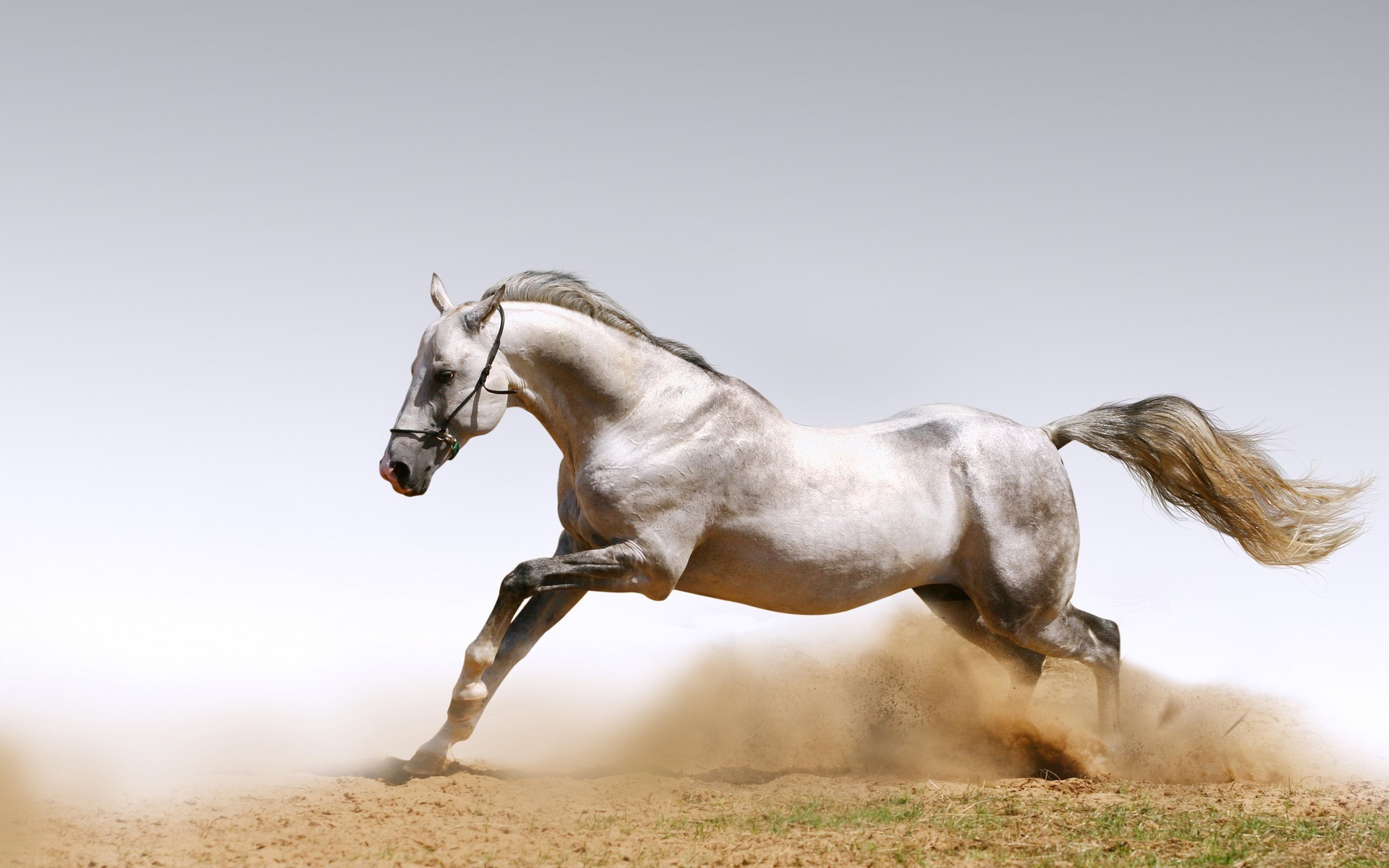 Use 9 Beautiful White Running Horse Wallpapers for your Desktop Background.  You can Share below White Horses Running Wallpapers for Desktop .