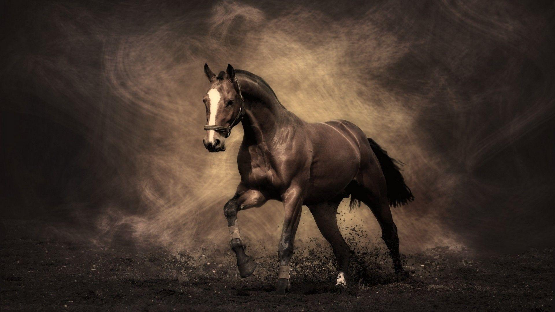 Arabian Racing Horse Desktop | High Quality Wallpapers,Wallpaper .