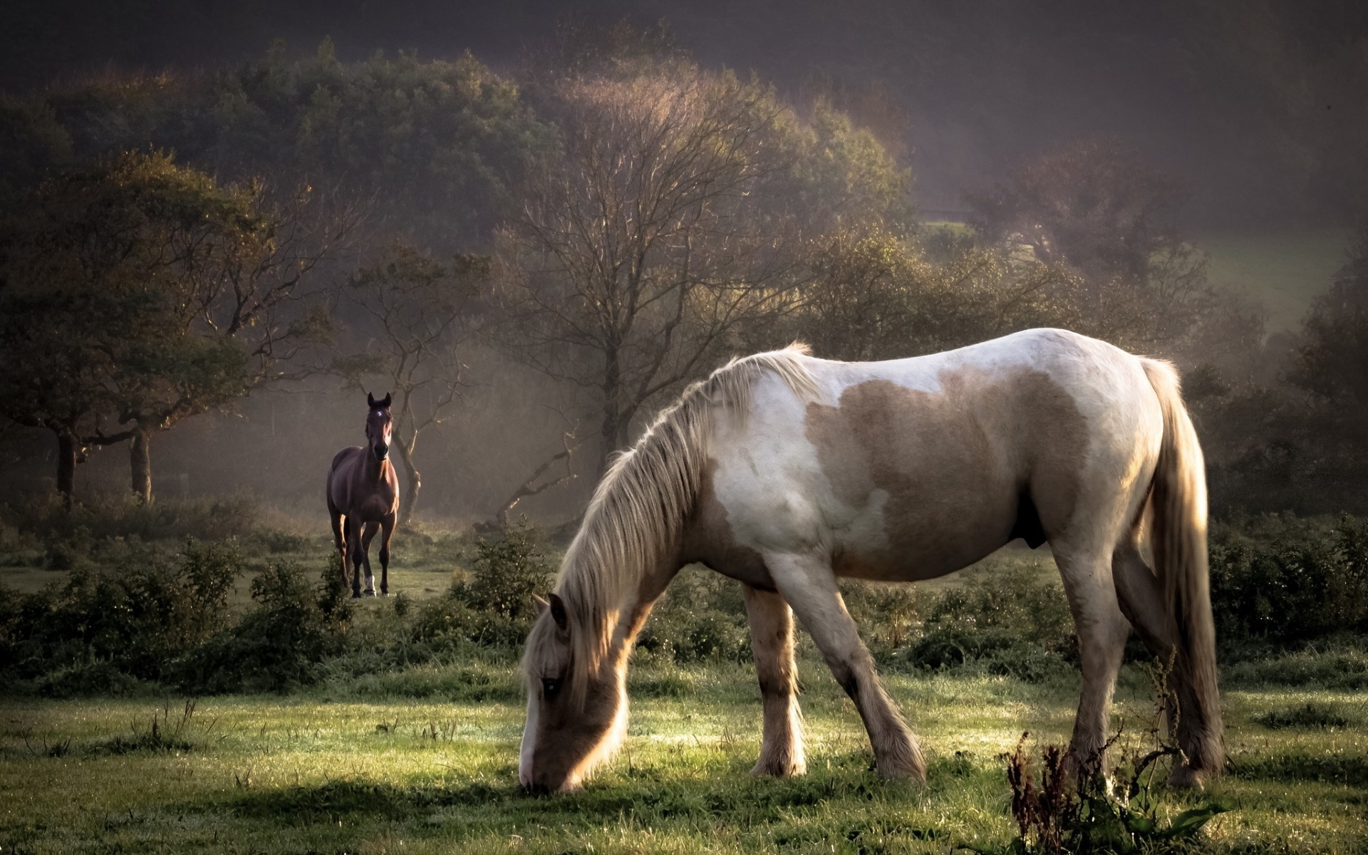 horse screensavers backgrounds