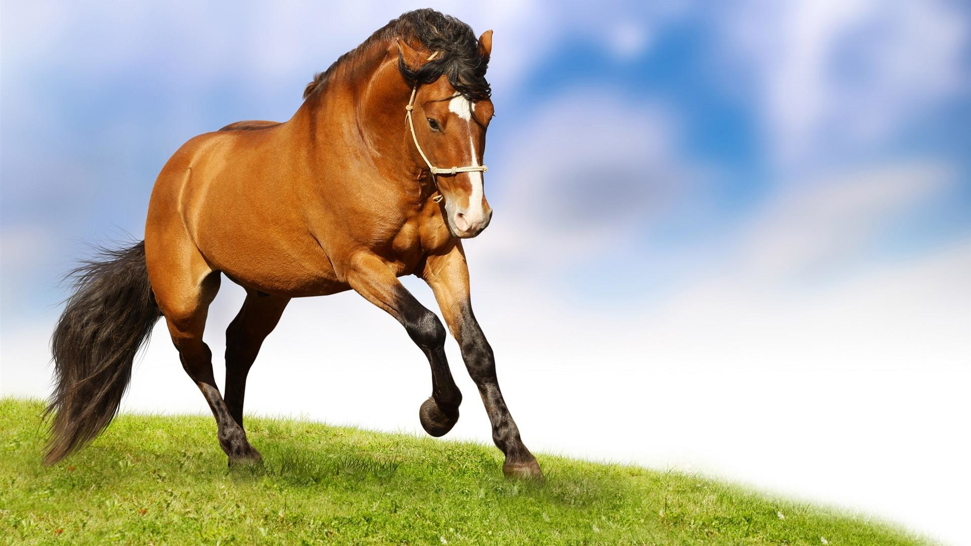 Christmas Horses Wallpaper for Computer | Home » Animals pictures » Horse  wallpapers