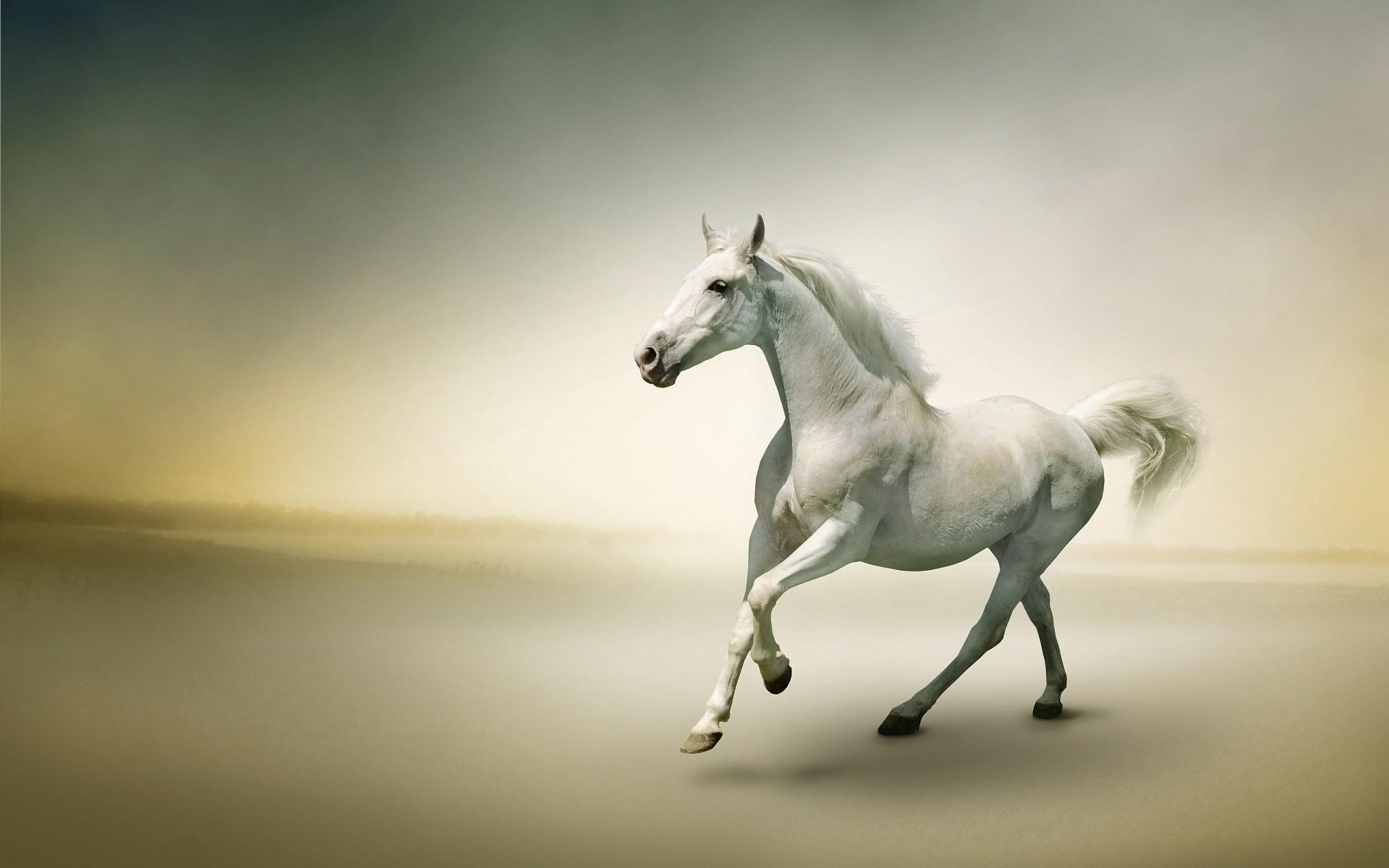 Horse Desktop Wallpapers
