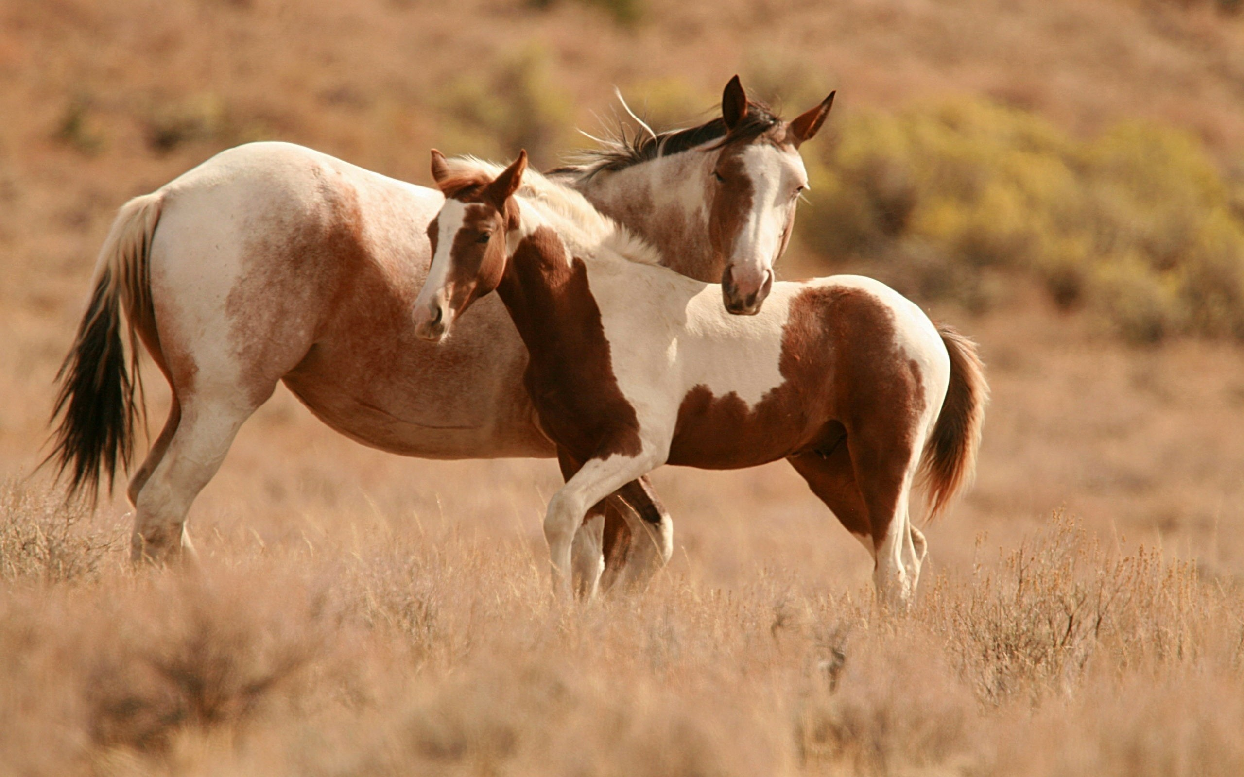 horse wallpapers cool. Â«Â«