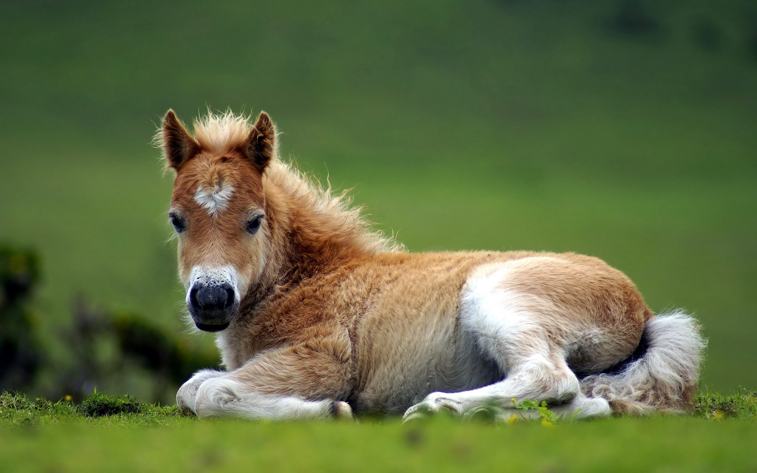 #1418251, horse category – free screensaver wallpapers for horse